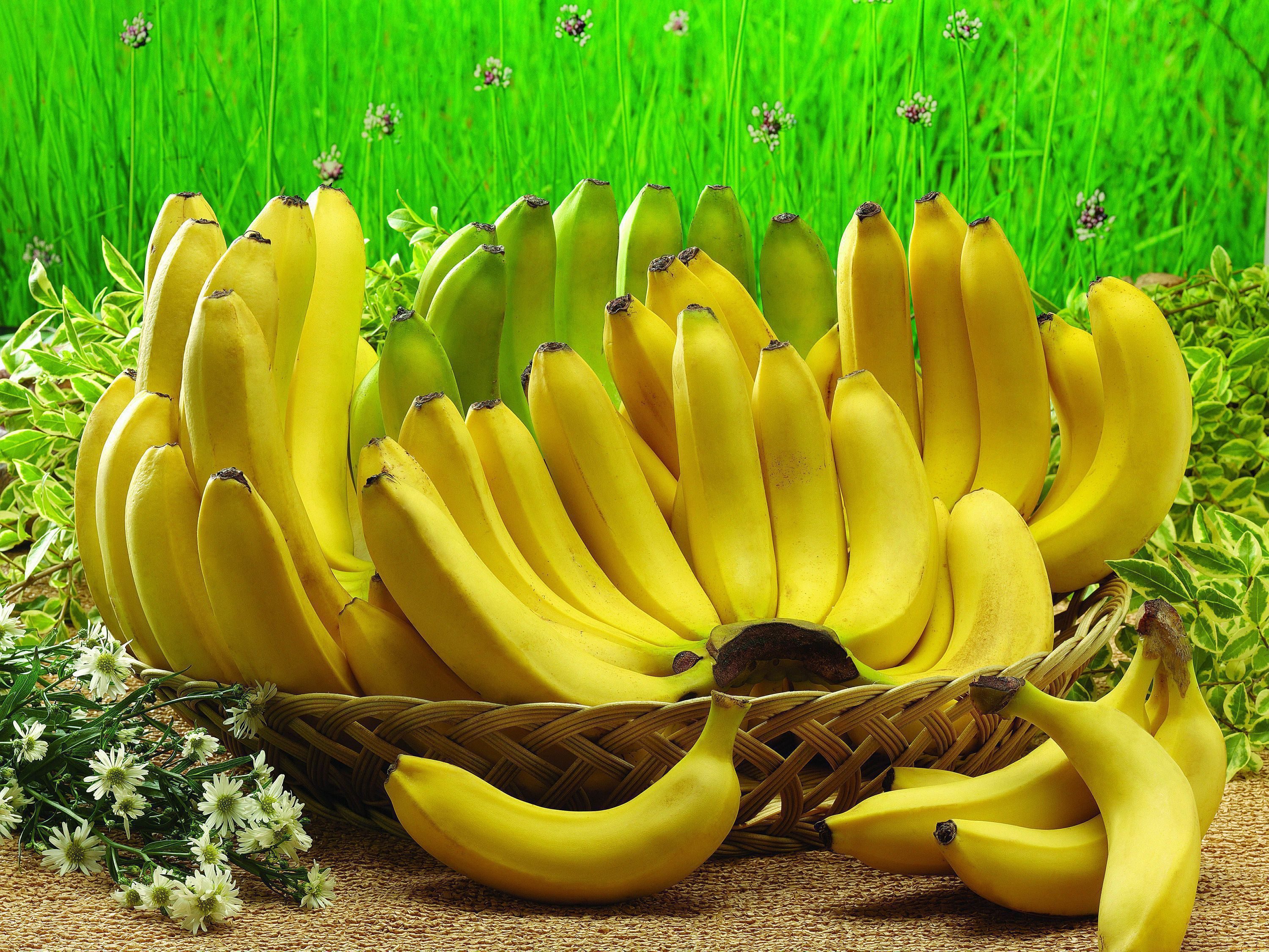 Bananas Wallpapers HD