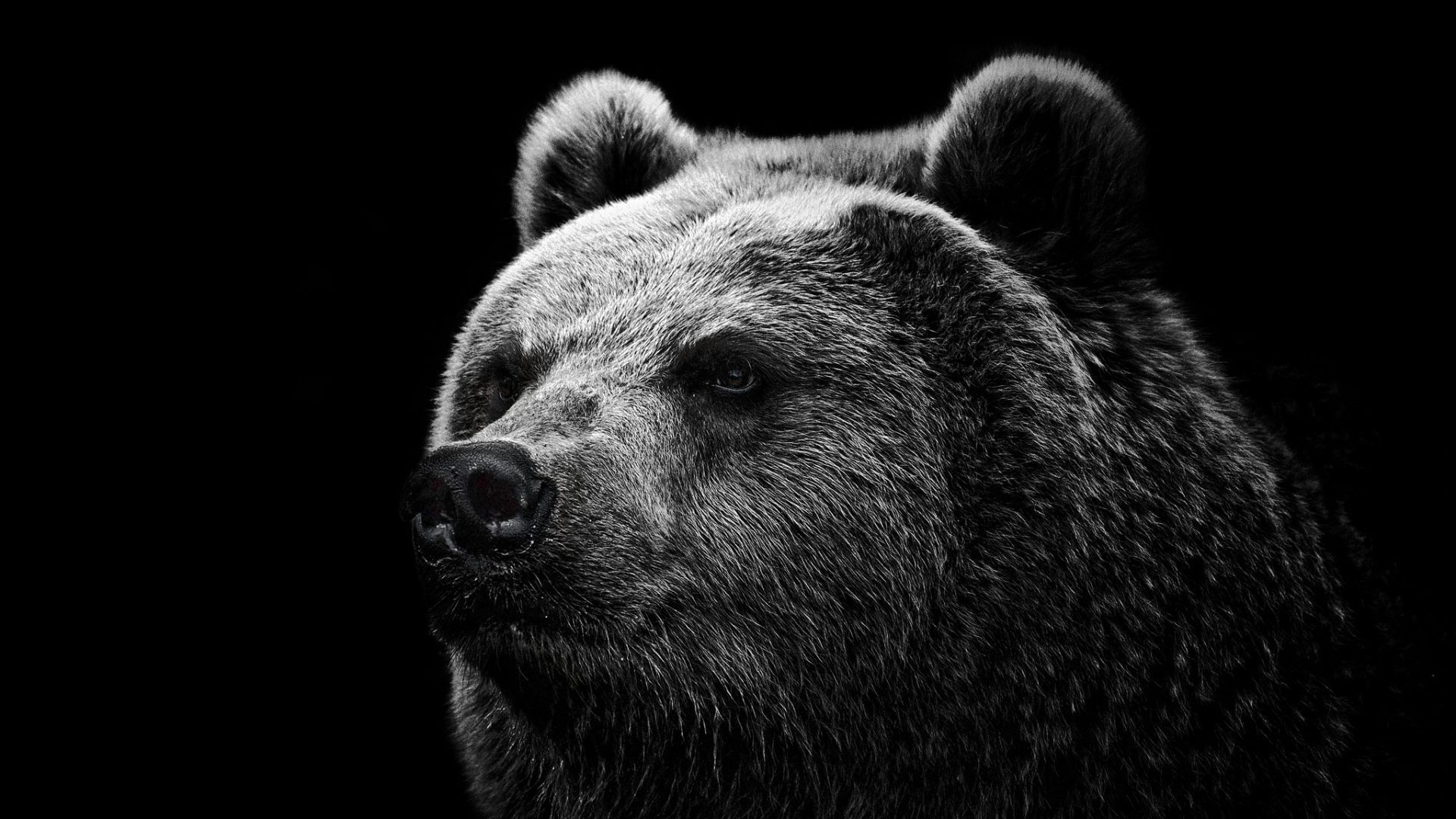 Black Bear Widescreen