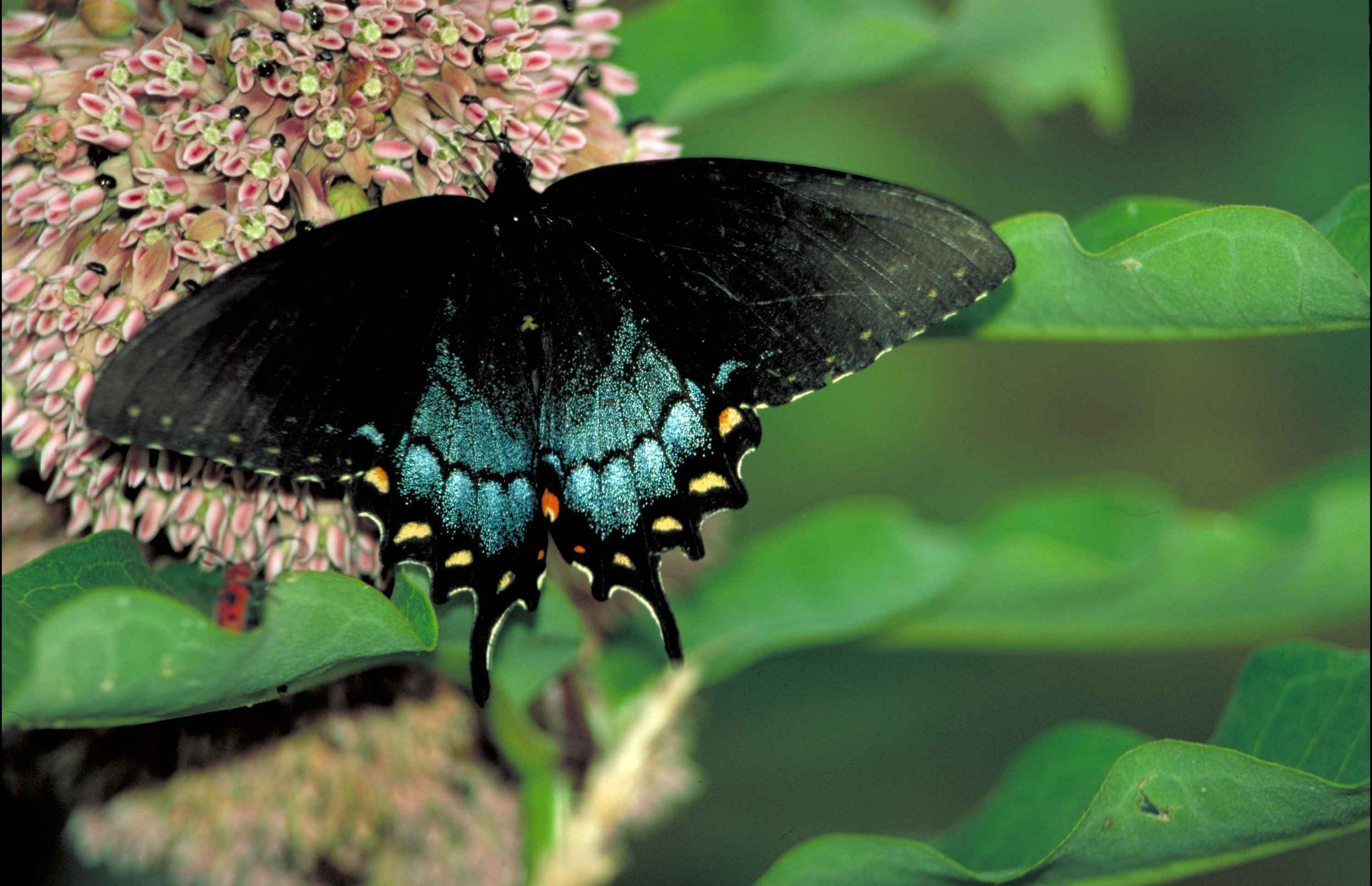 Black Butterfly Beautiful