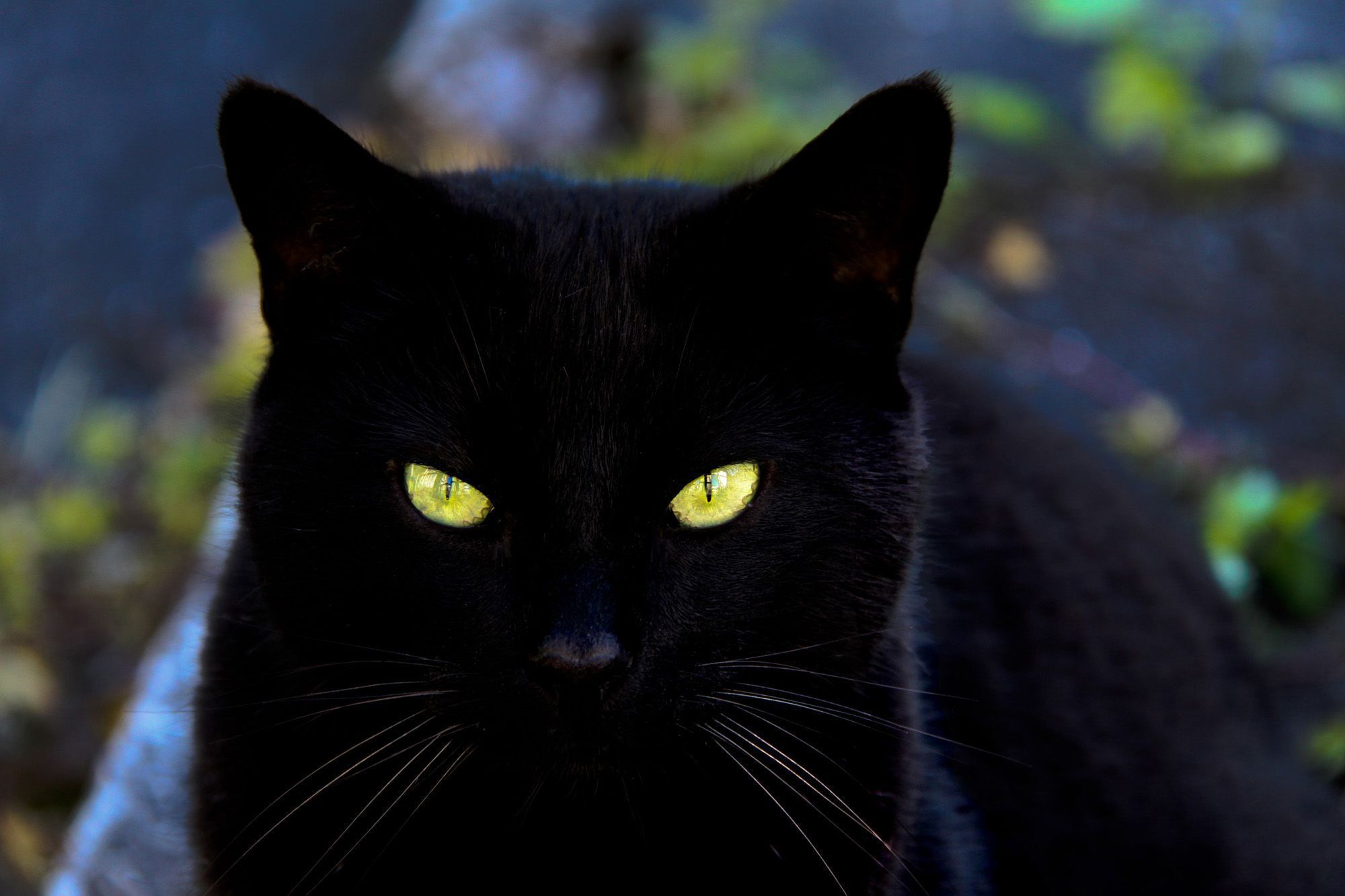 Black Cat High Quality Wallpapers
