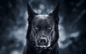 Black German Shepherd Pictures