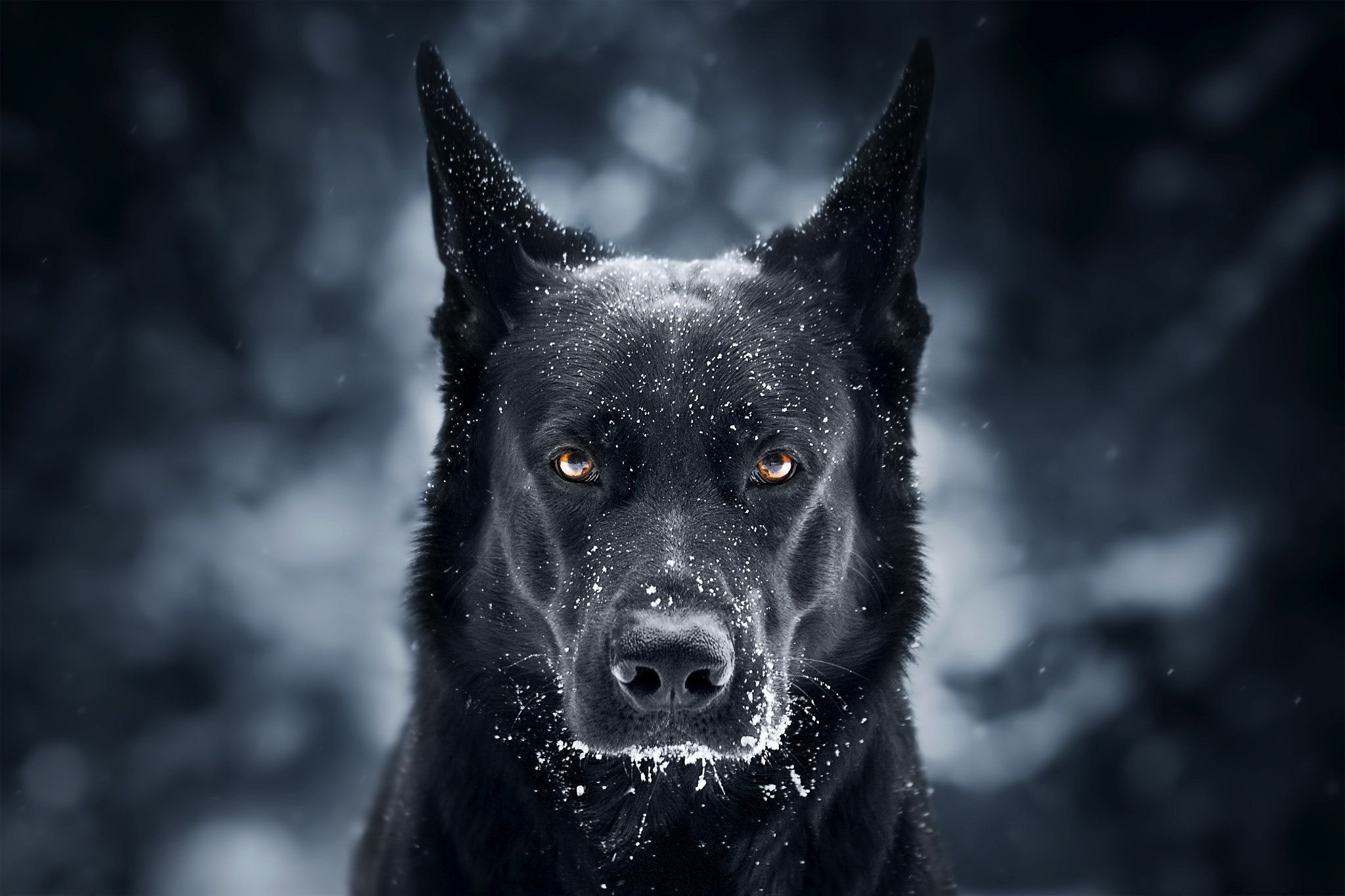 german shepherd wallpapers free