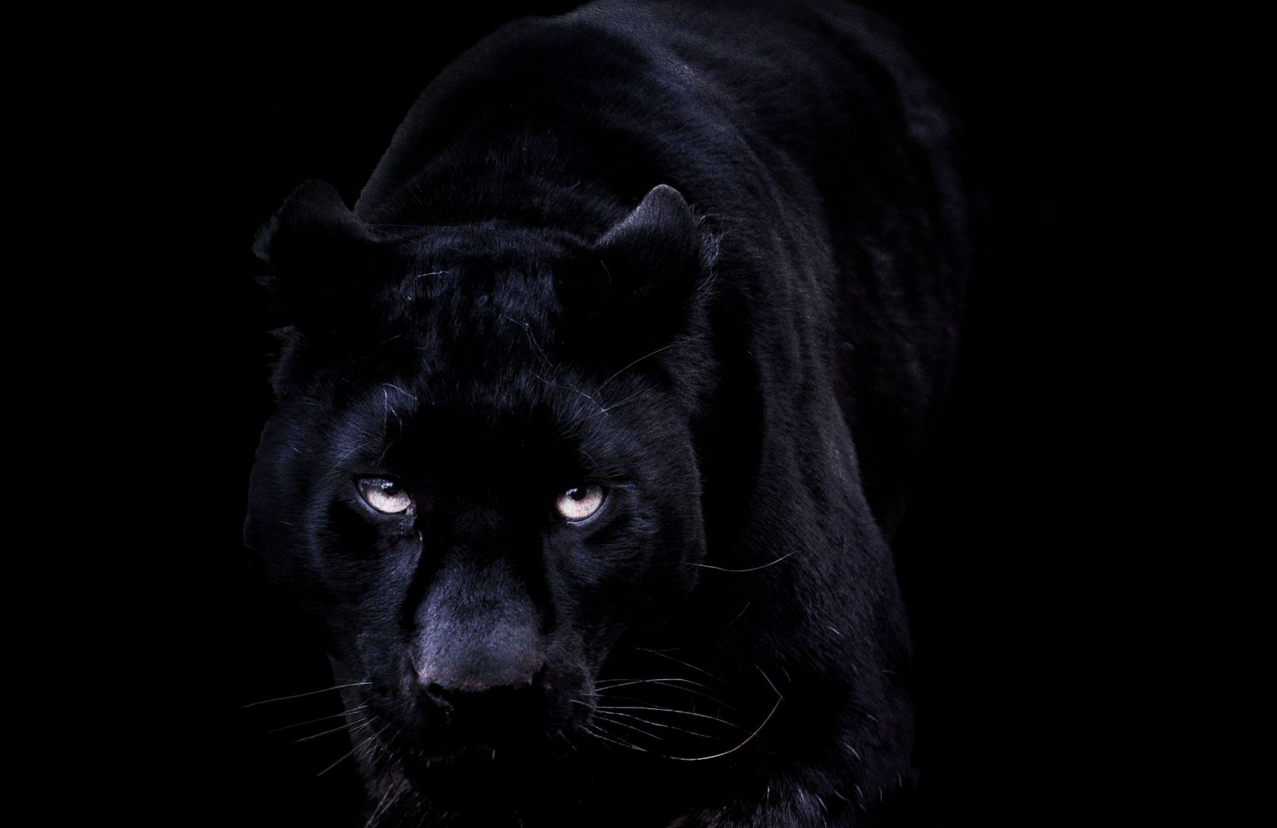 Black Jaguar Wallpaper Pack