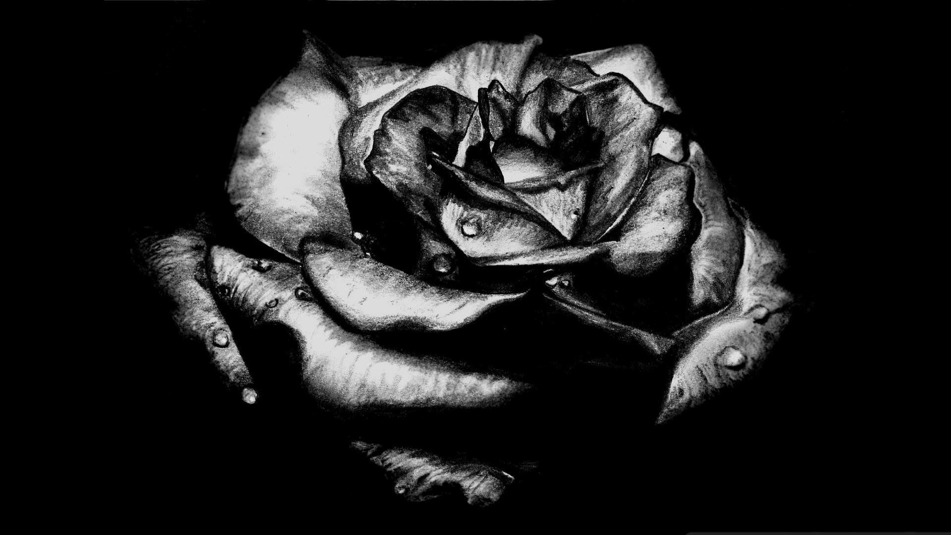 Black Rose High Definition Wallpapers