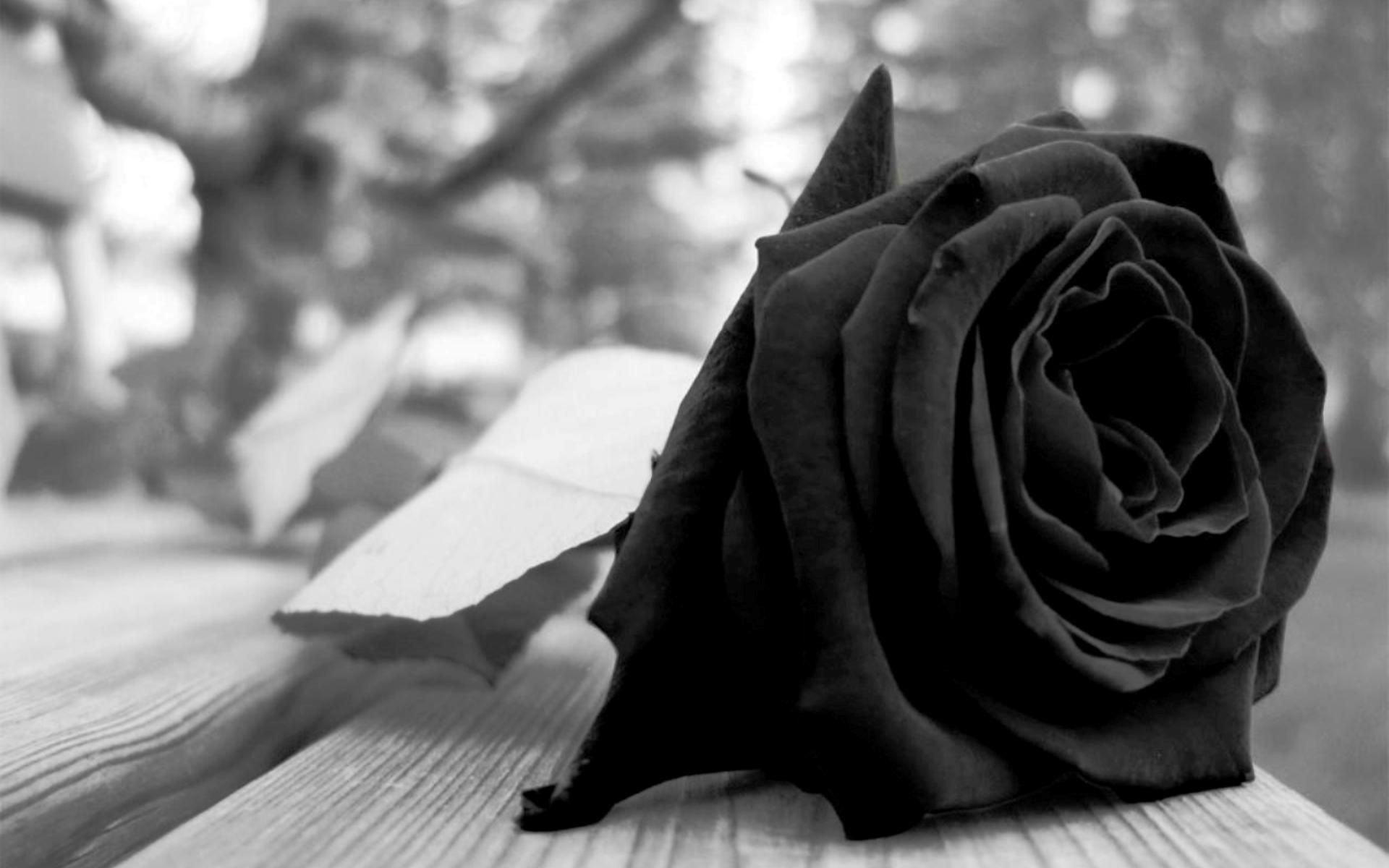 Black Rose Tumblr
