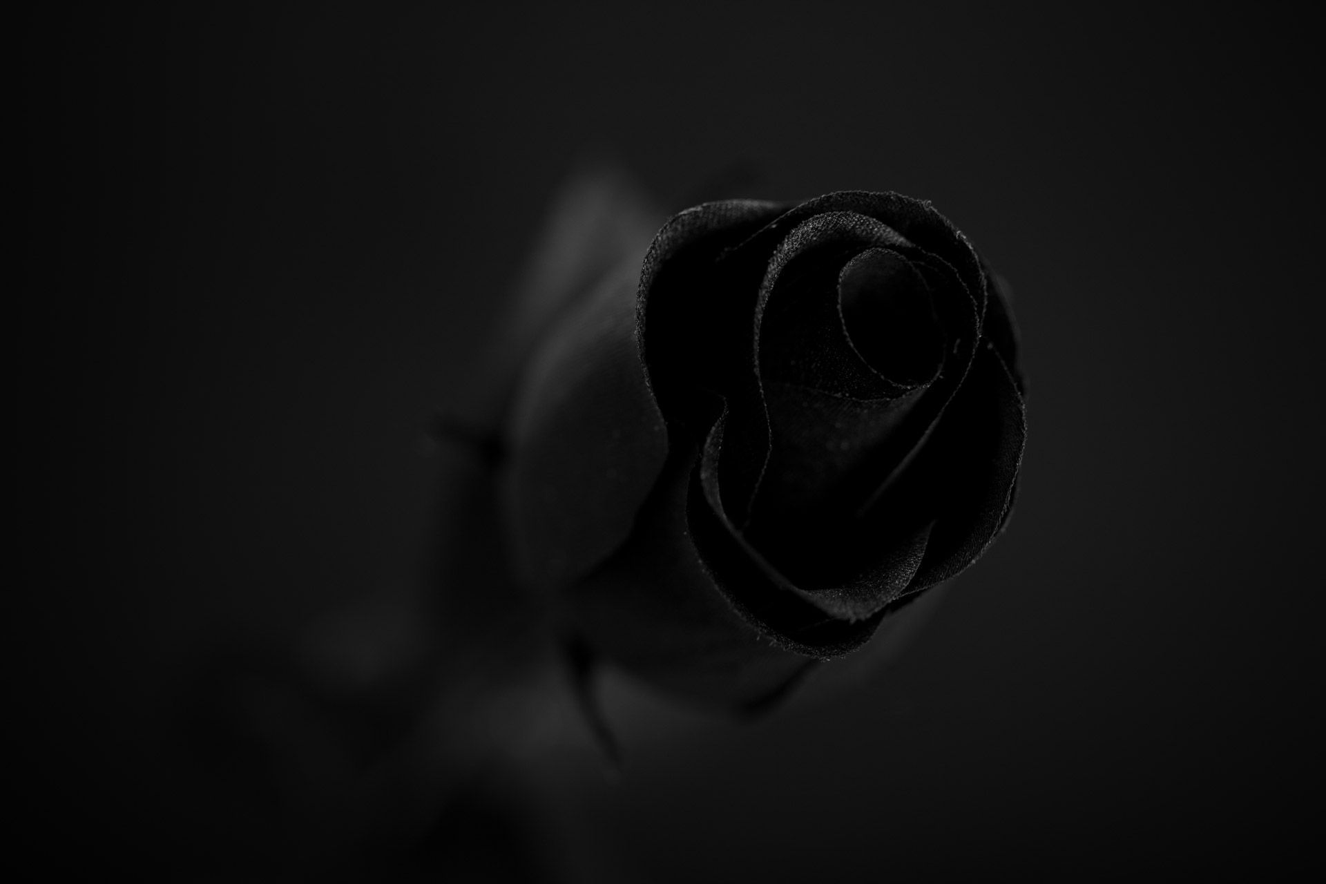 Black Rose Wallpaper Pack