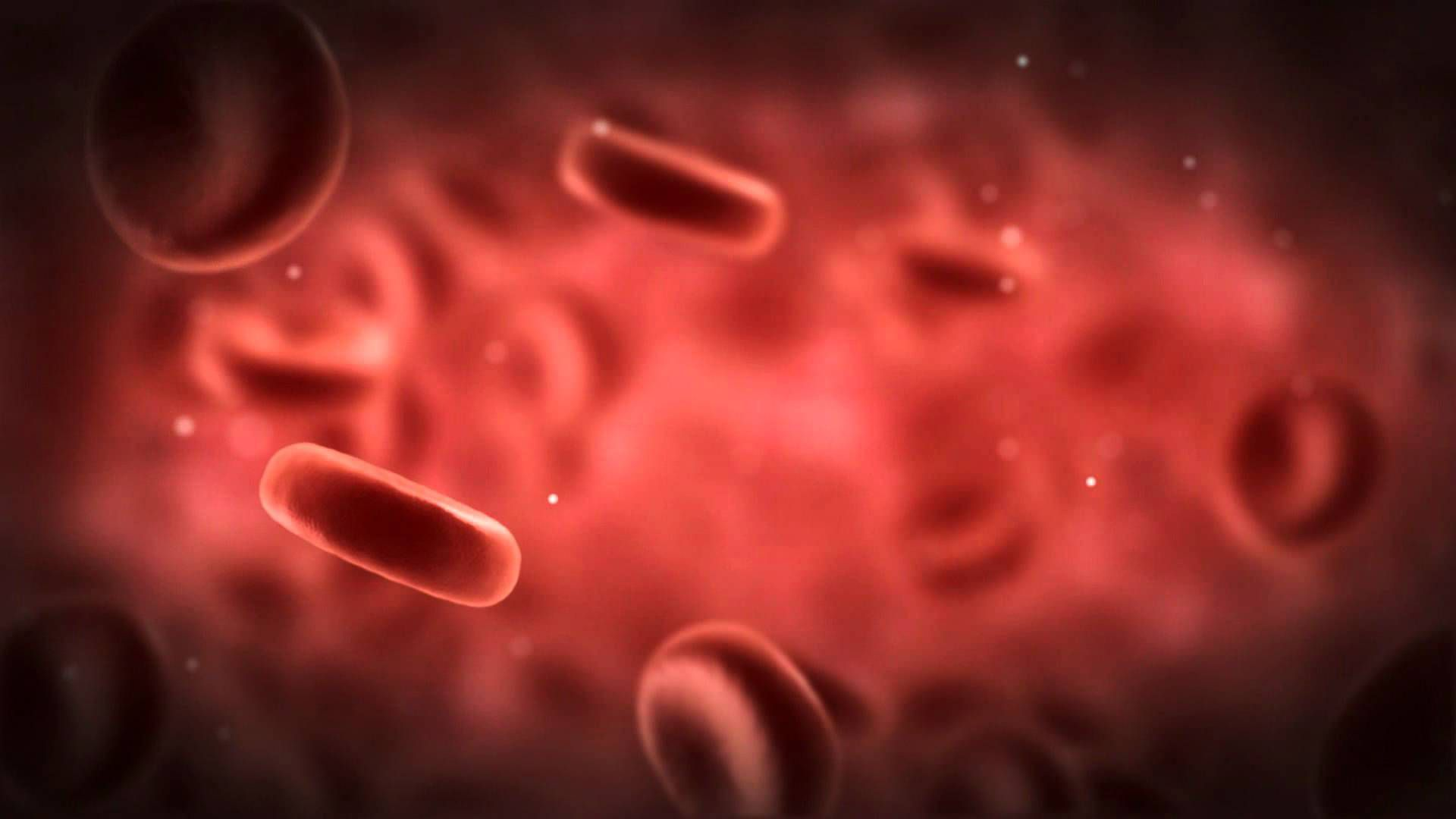 Blood Cells High Quality Wallpapers