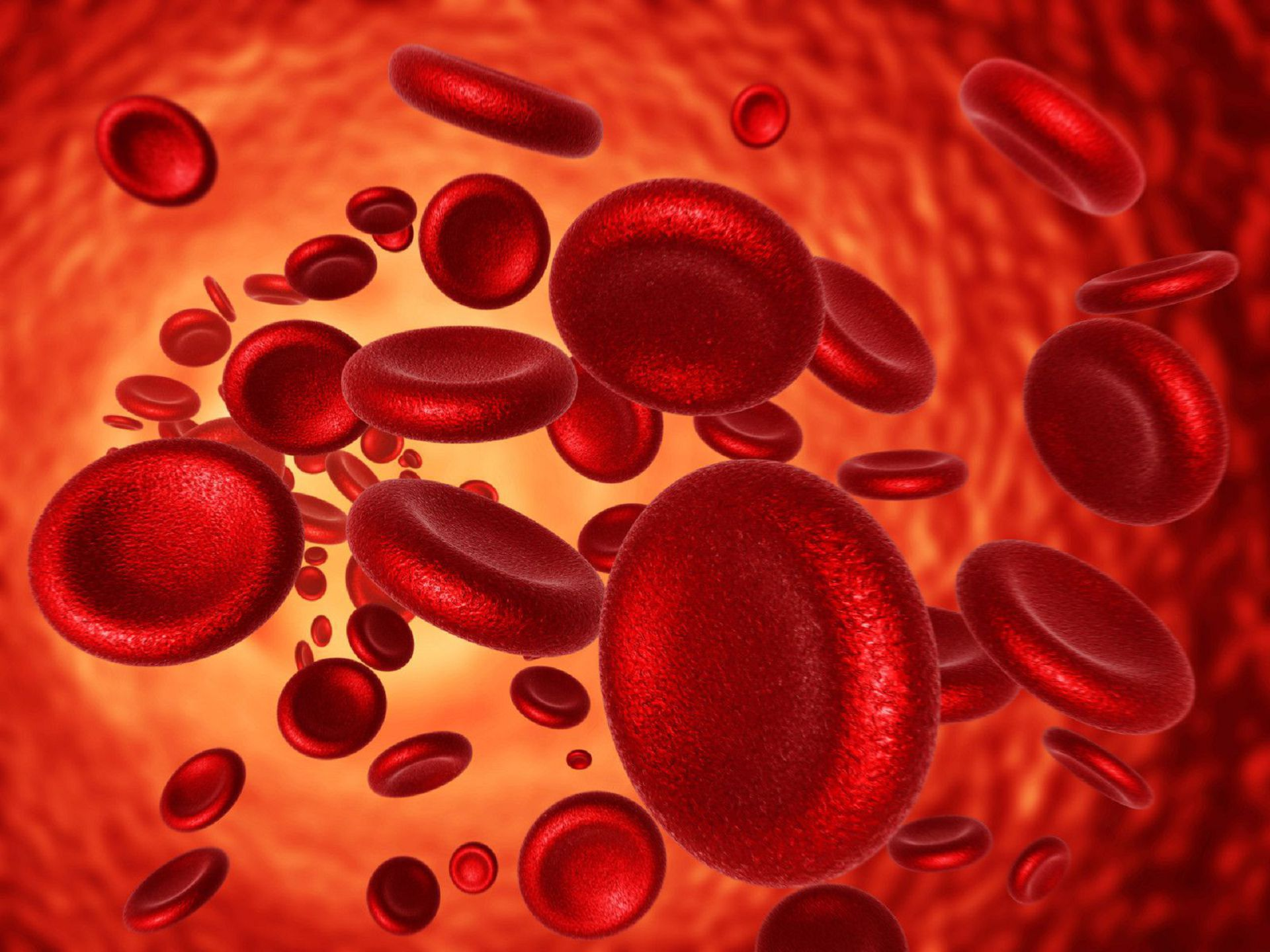 Blood Cells Widescreen