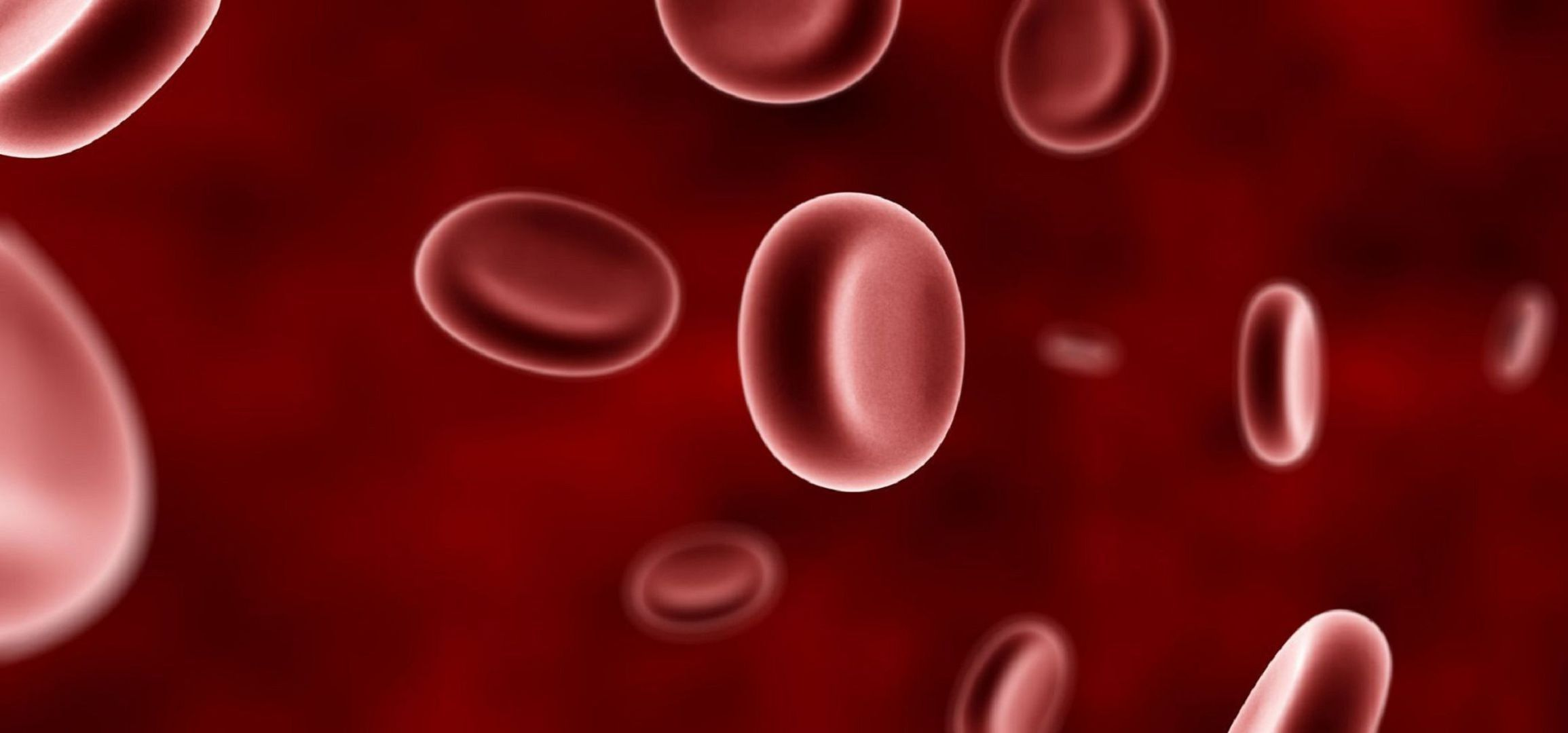 Blood Cells In High Resolution