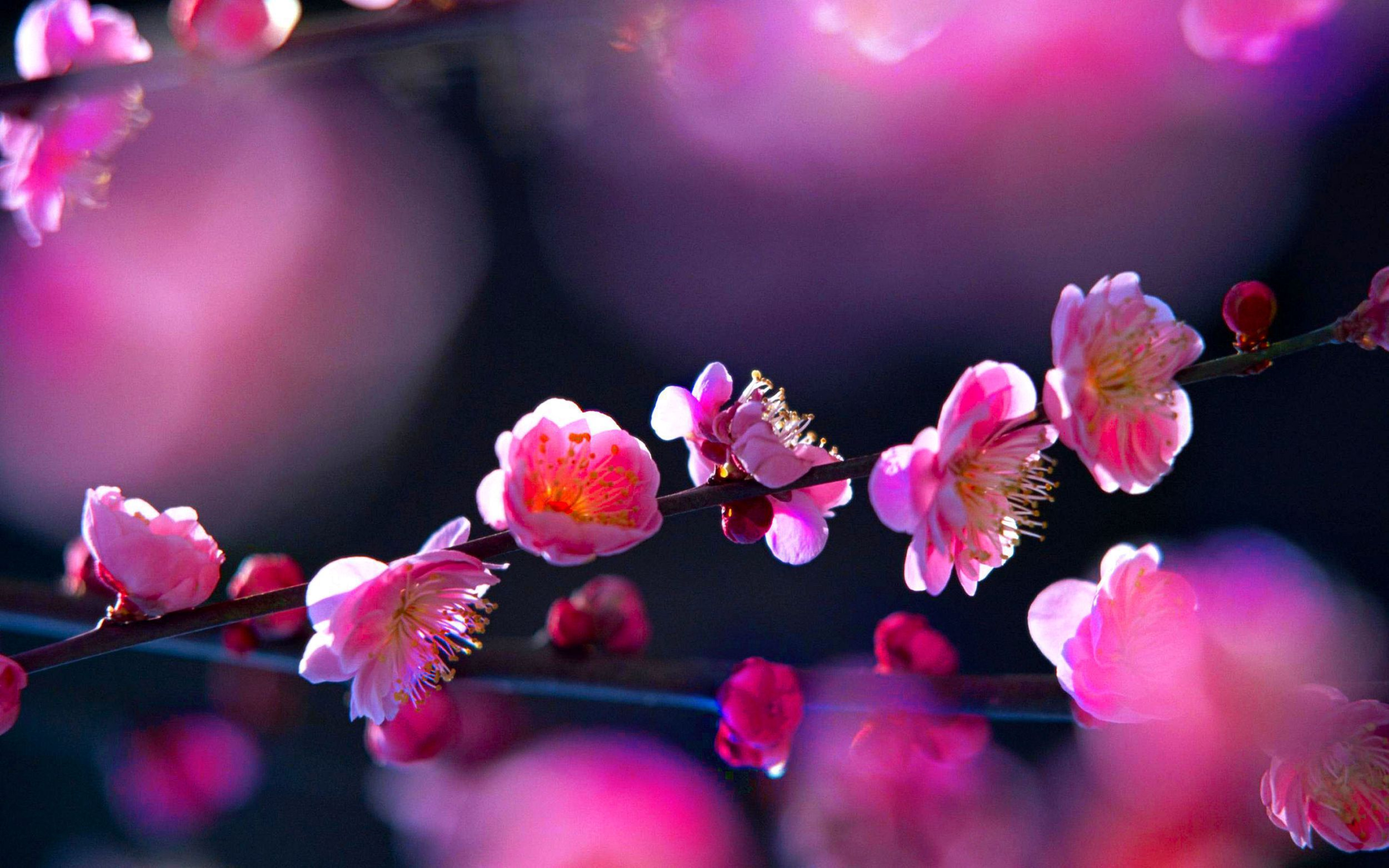 Blossoms Wallpaper