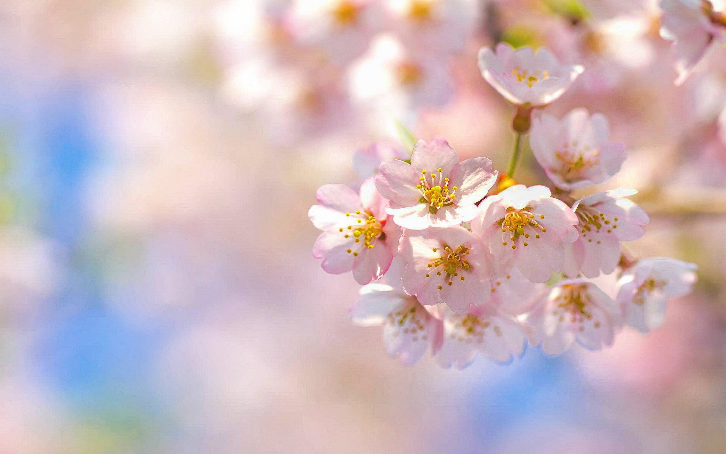 Blossoms Wallpaper Pack