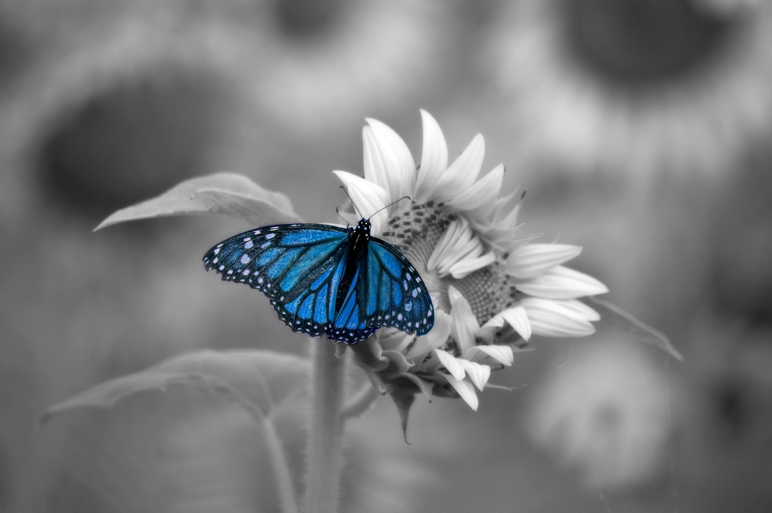 Blue Butterfly Gallery