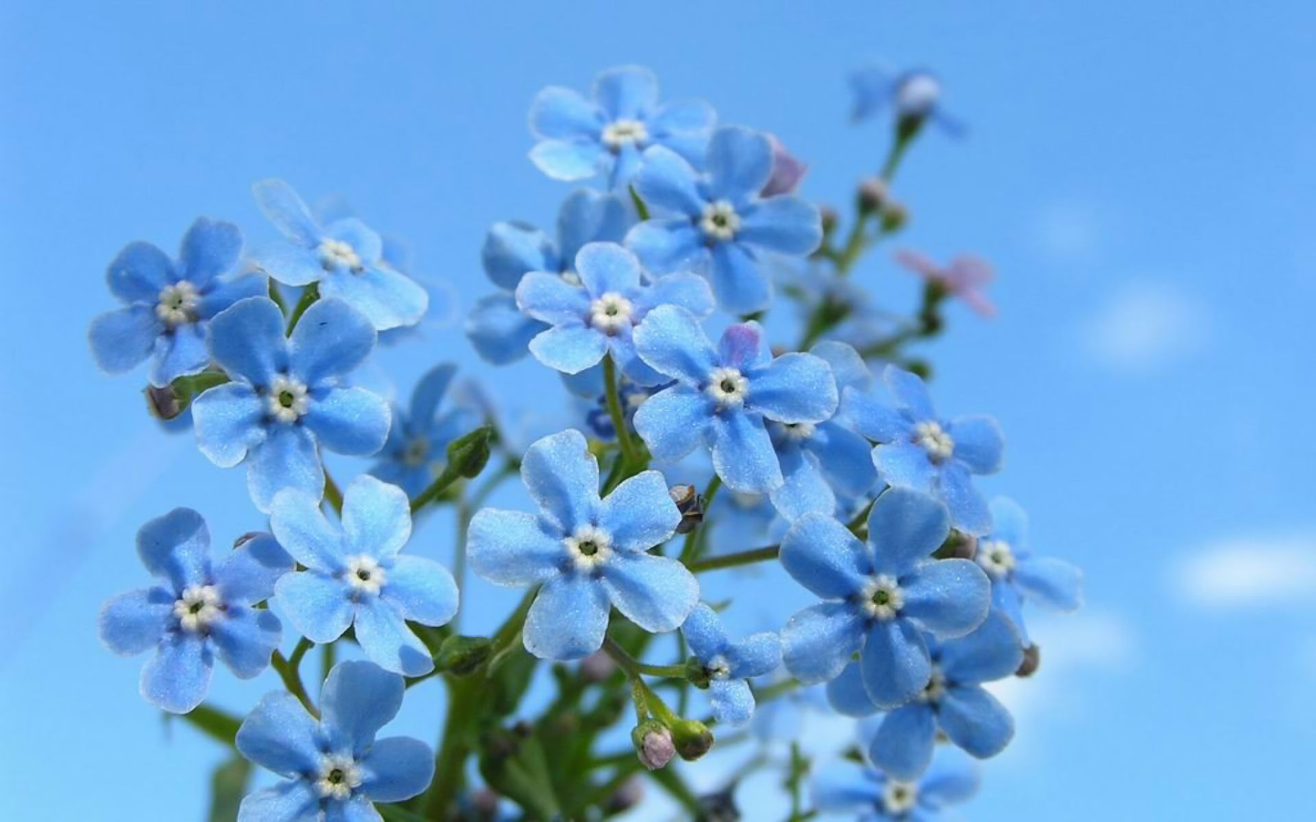 Blue Flowers Collection