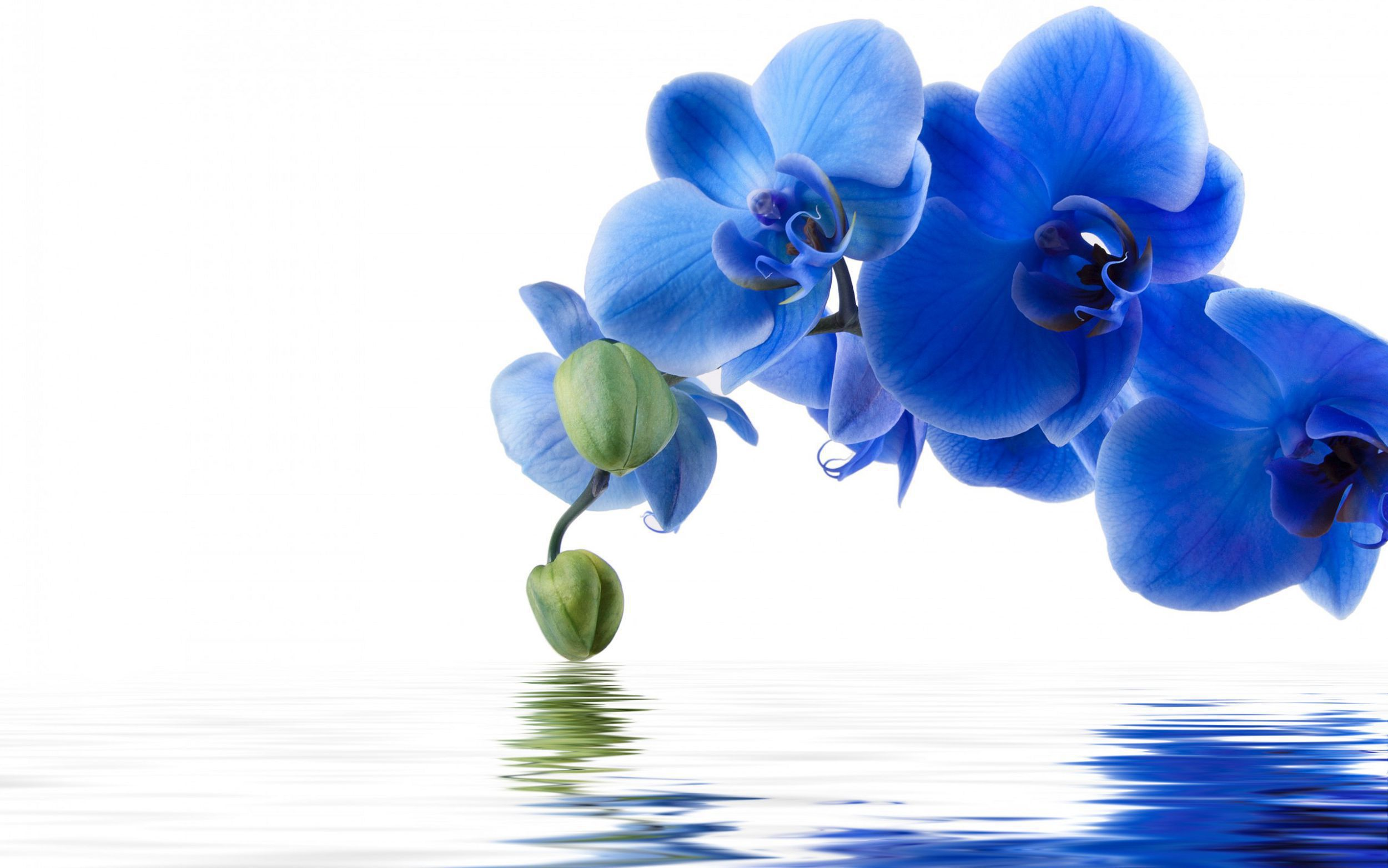 Blue Flowers In High Resolution