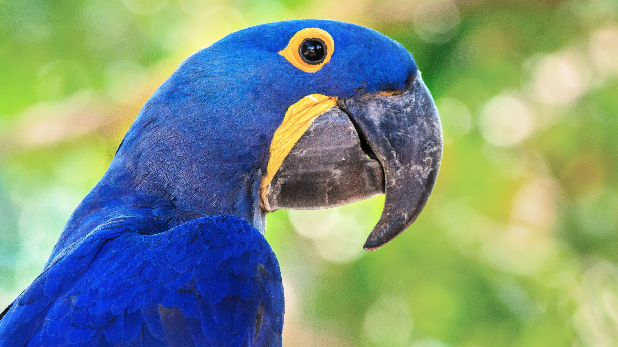 Blue Parrot Background