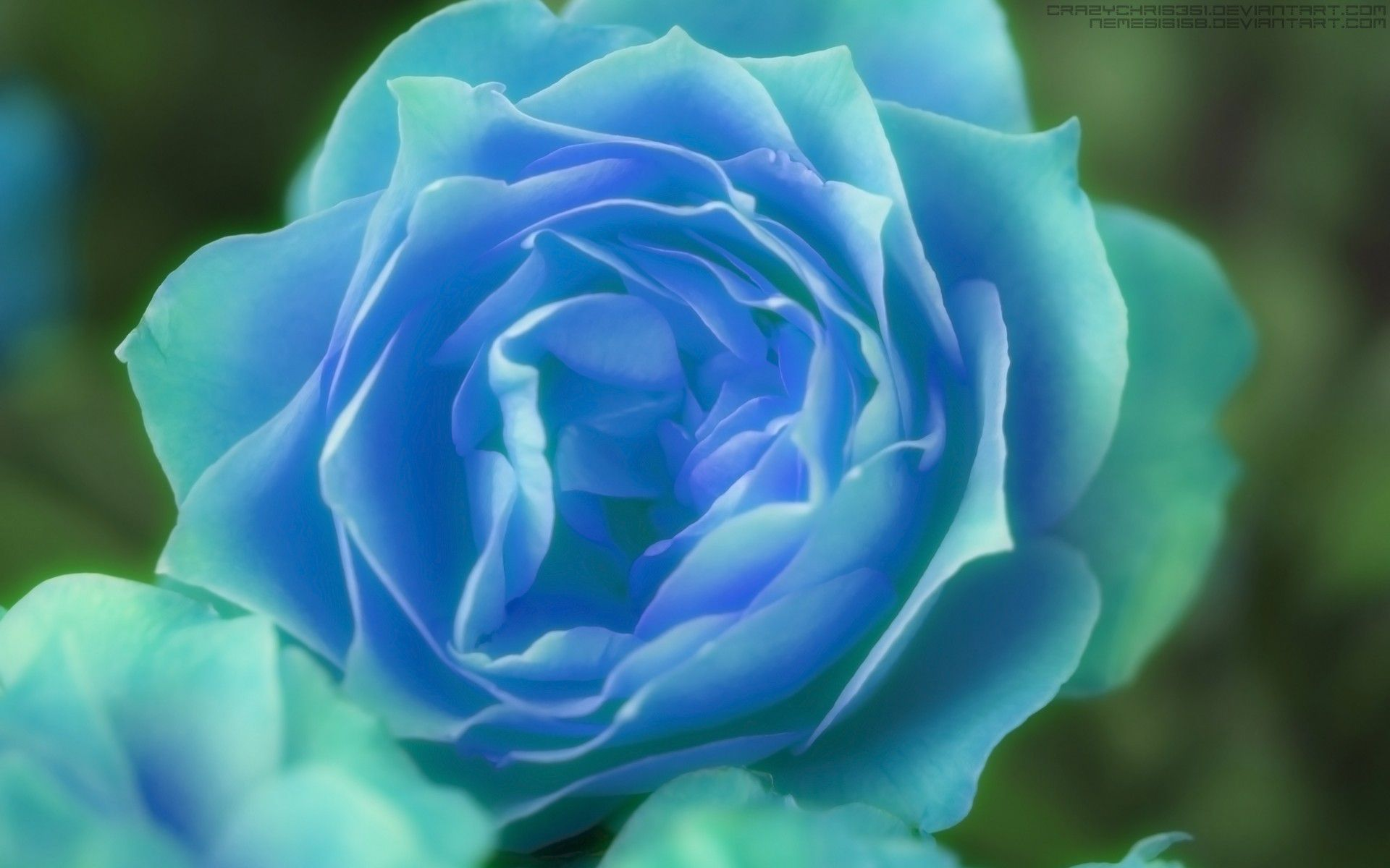 Blue Flower Green Rose Desktop Spring Flowers