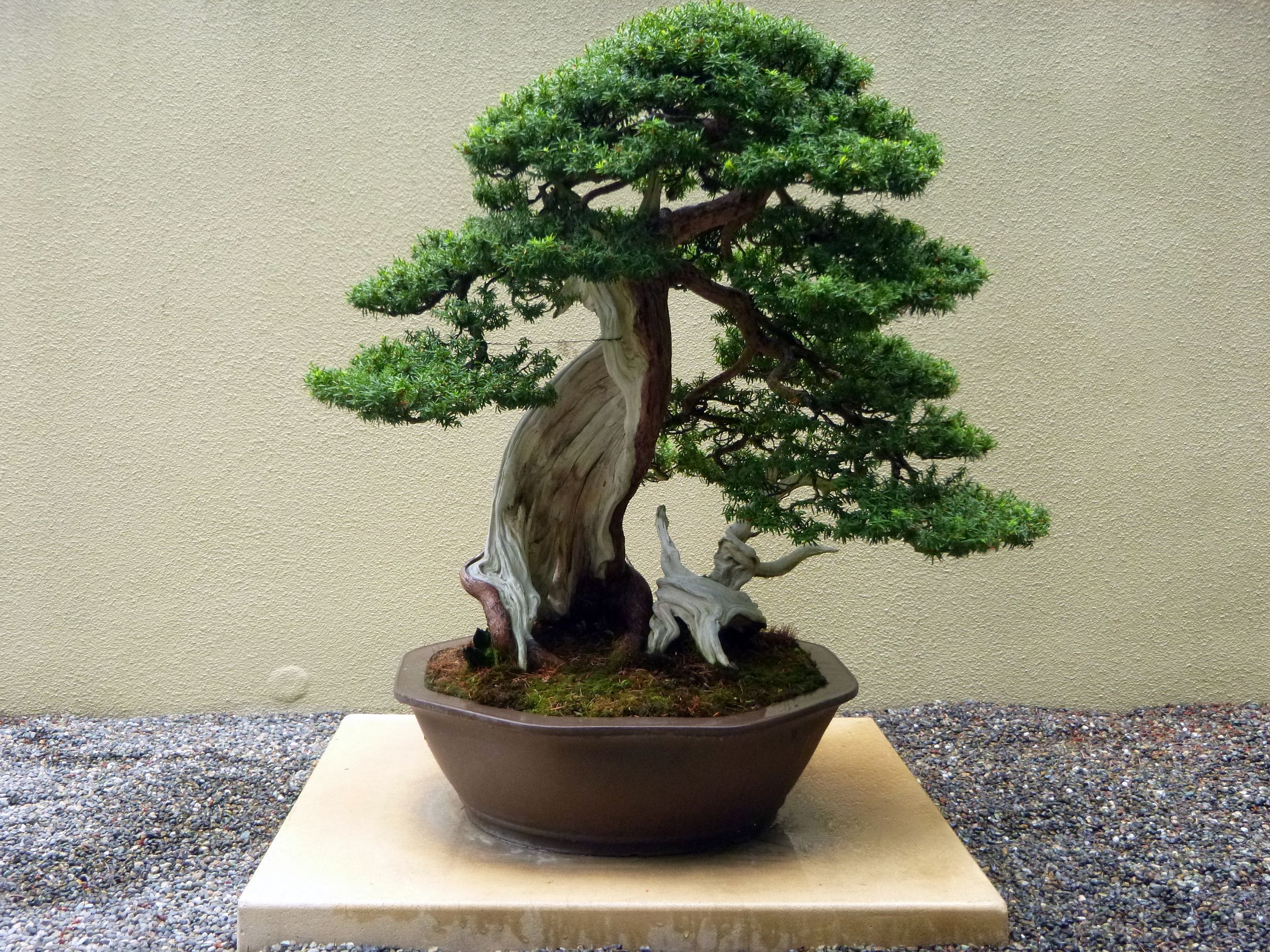 Bonsai Tree Intro