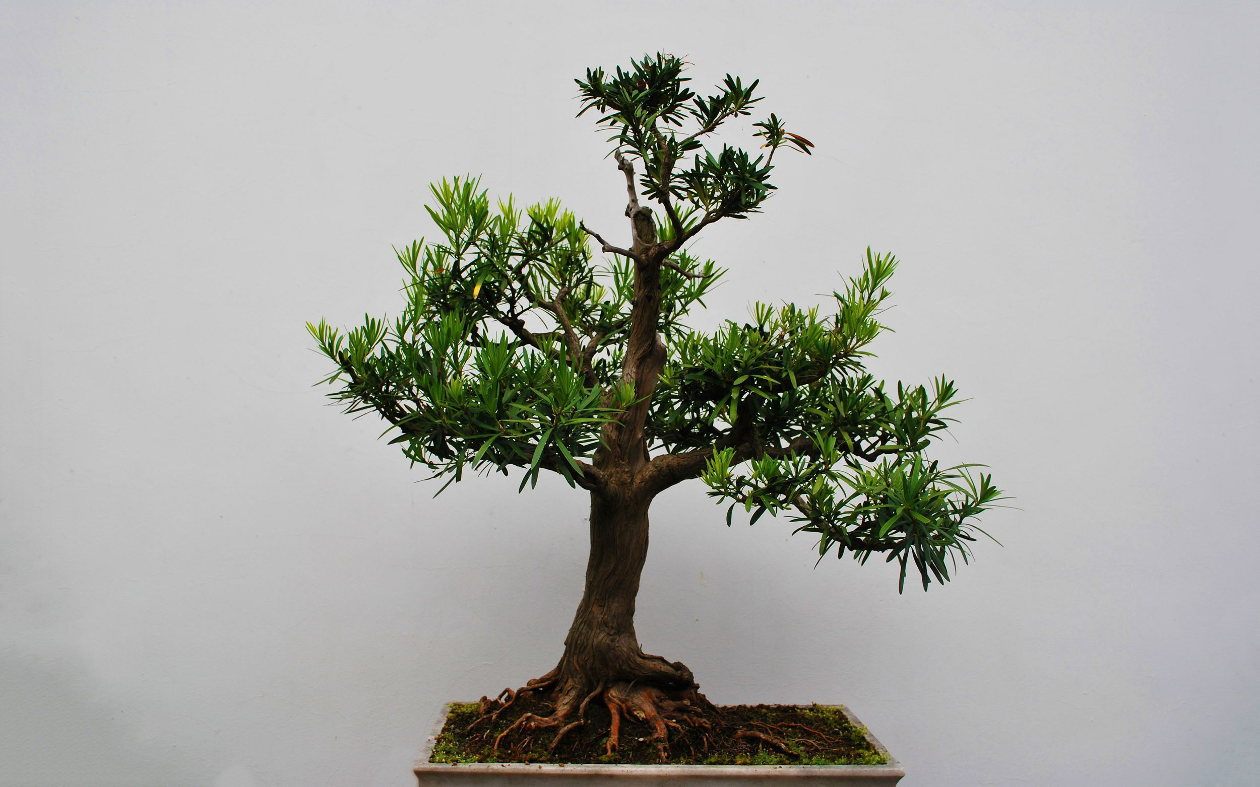 Bonsai High Definition Wallpapers