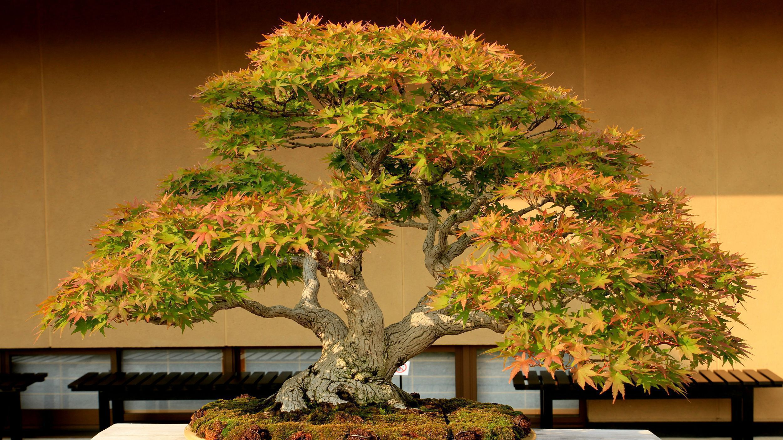 Bonsai Images