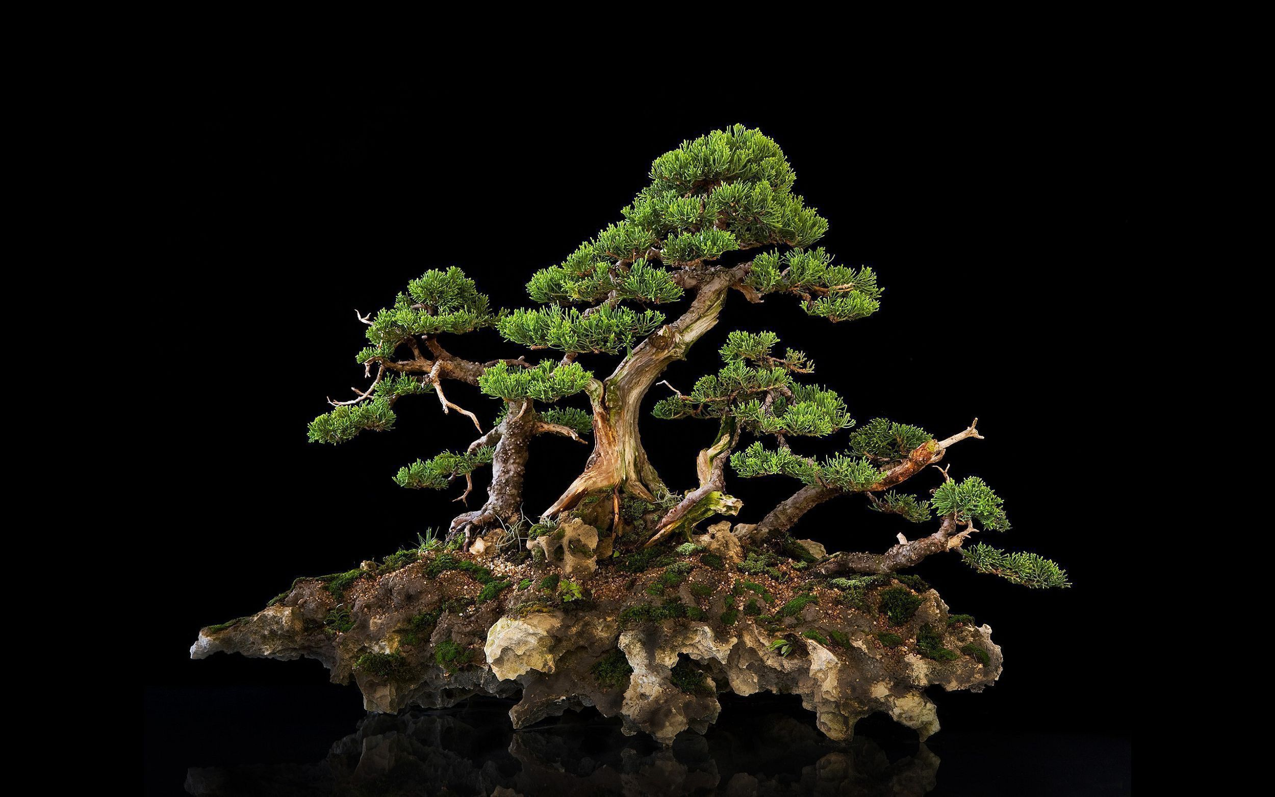 Bonsai Widescreen