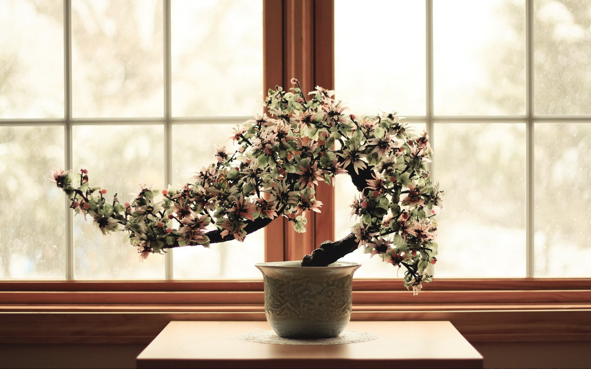 Bonsai In High Resolution
