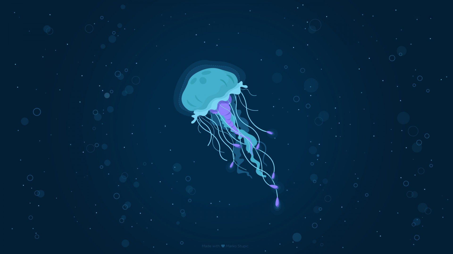 Box Jellyfish Gallery