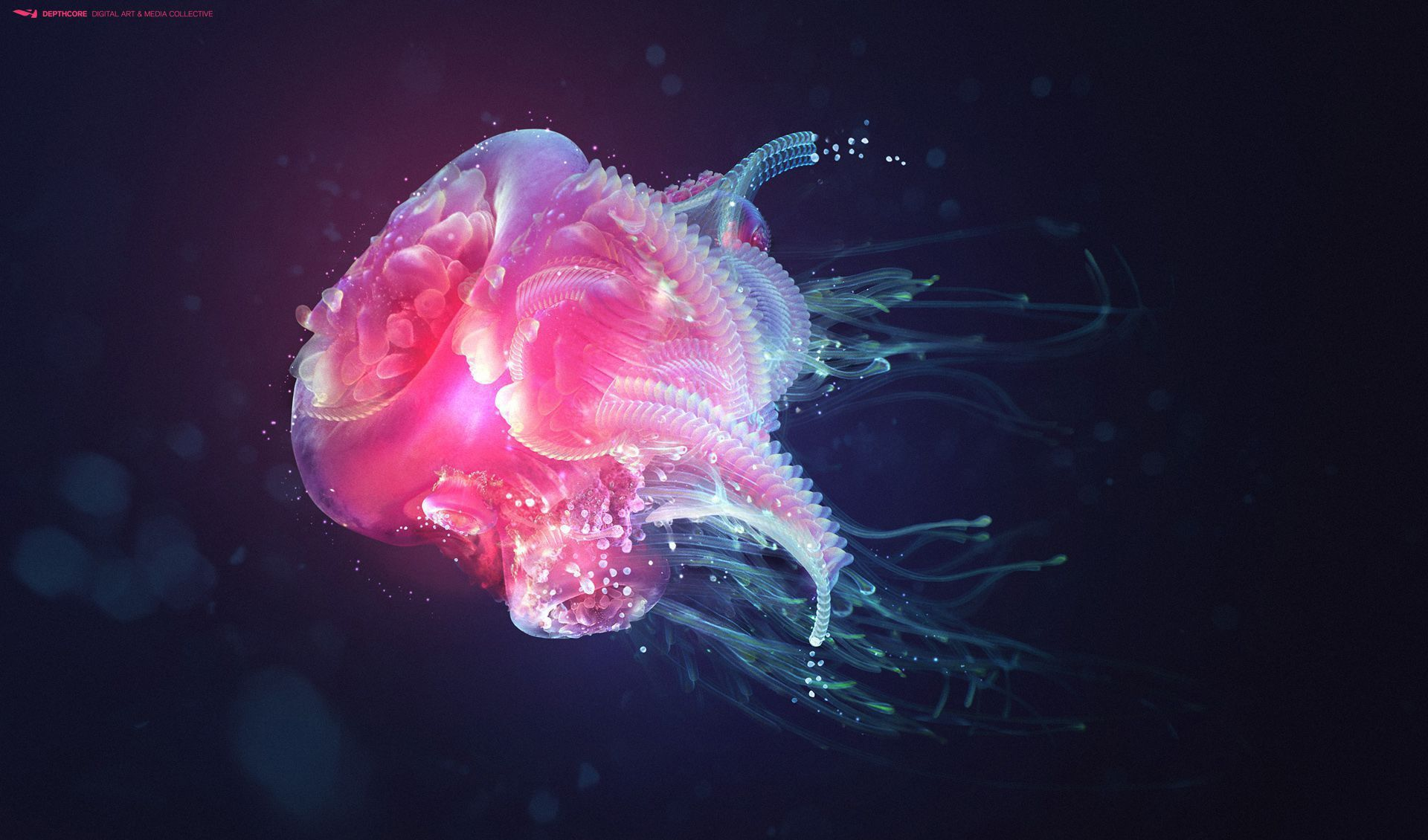 Box Jellyfish High Quality Wallpapers