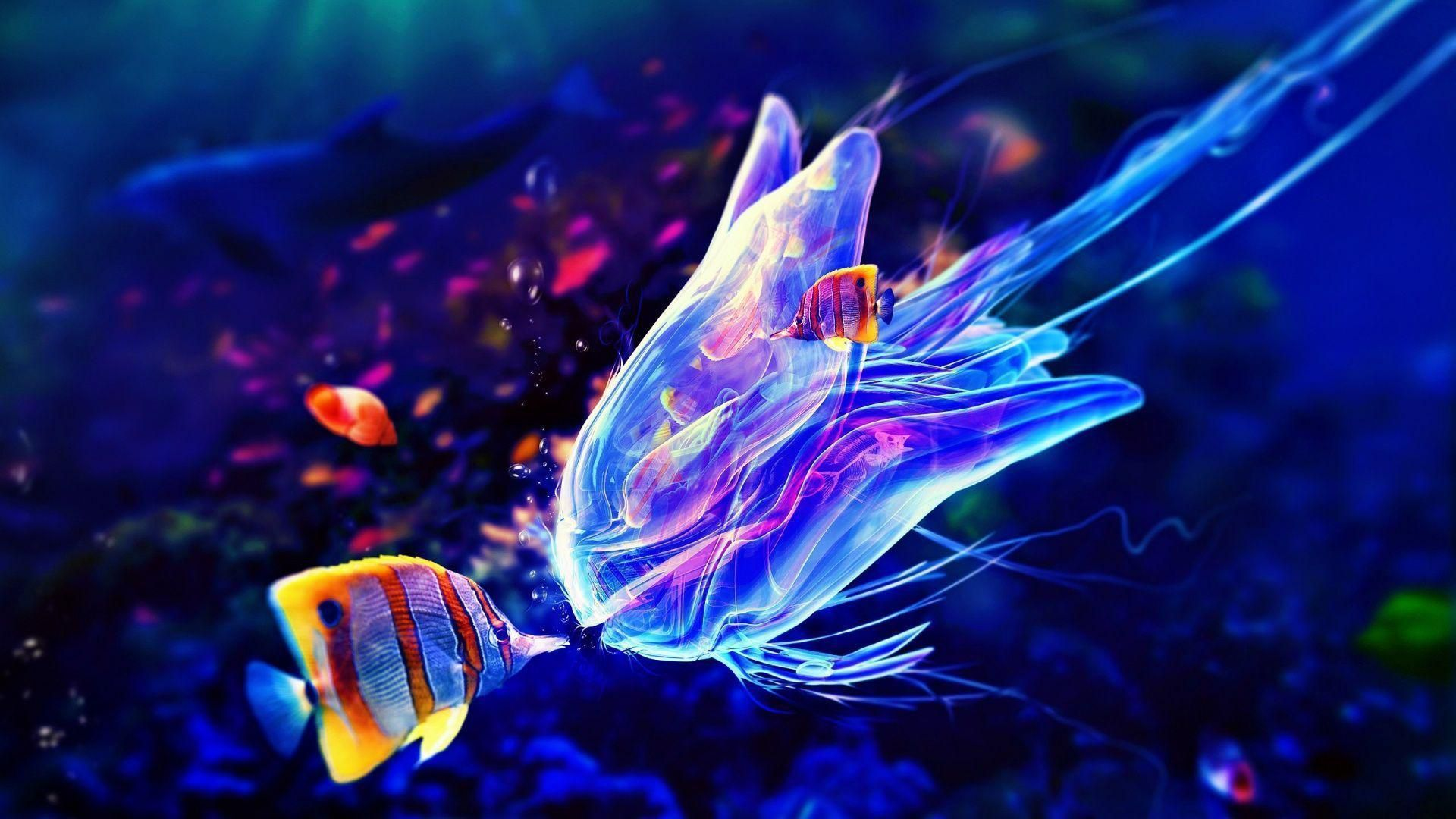 Box Jellyfish Pictures