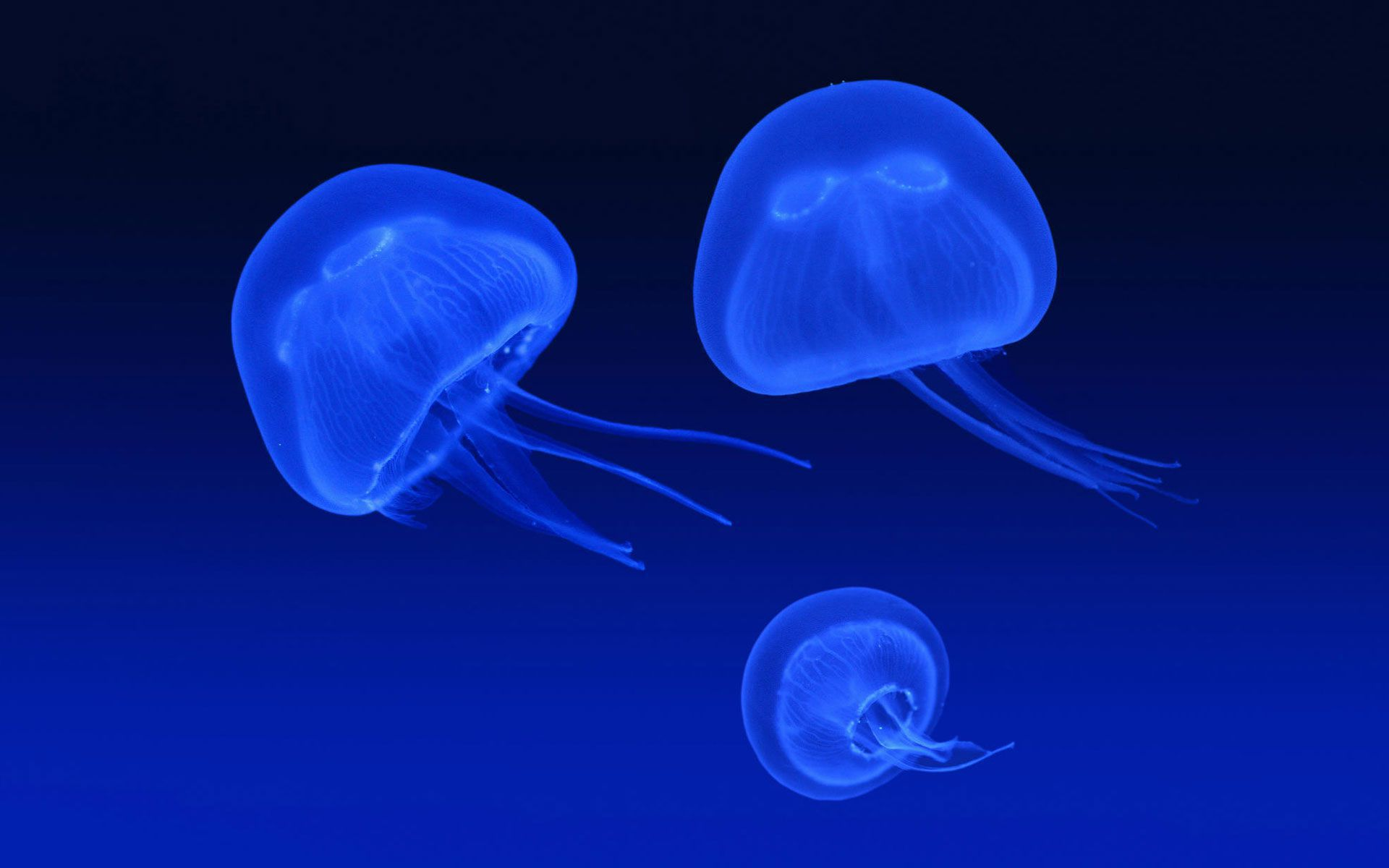Box Jellyfish Wallpapers HD