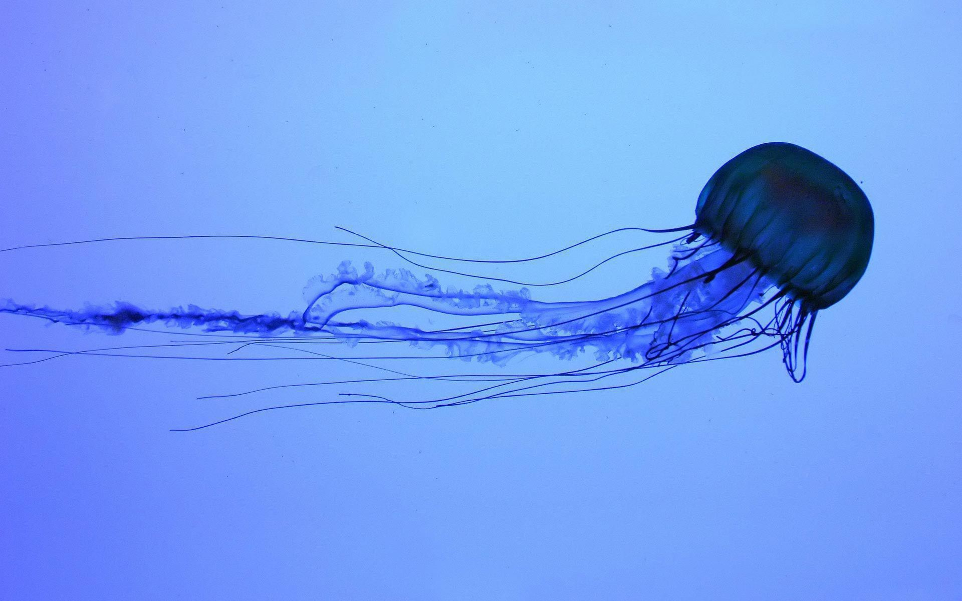 Box Jellyfish In High Resolution