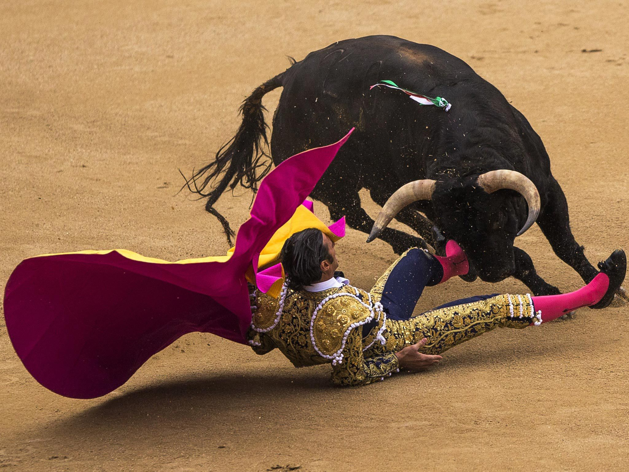 Bull Fighting HD Wallpaper