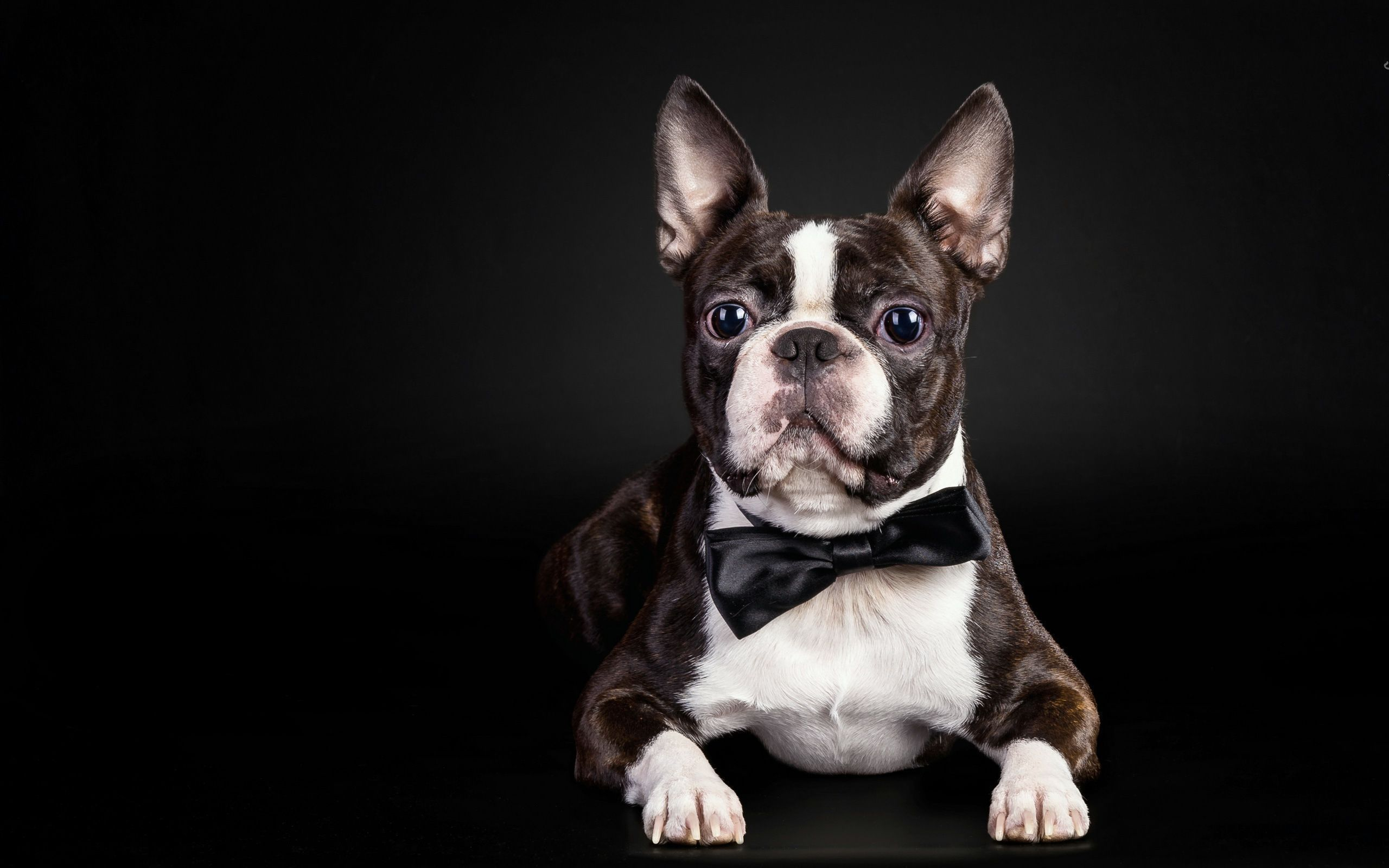 Bulldogs Images