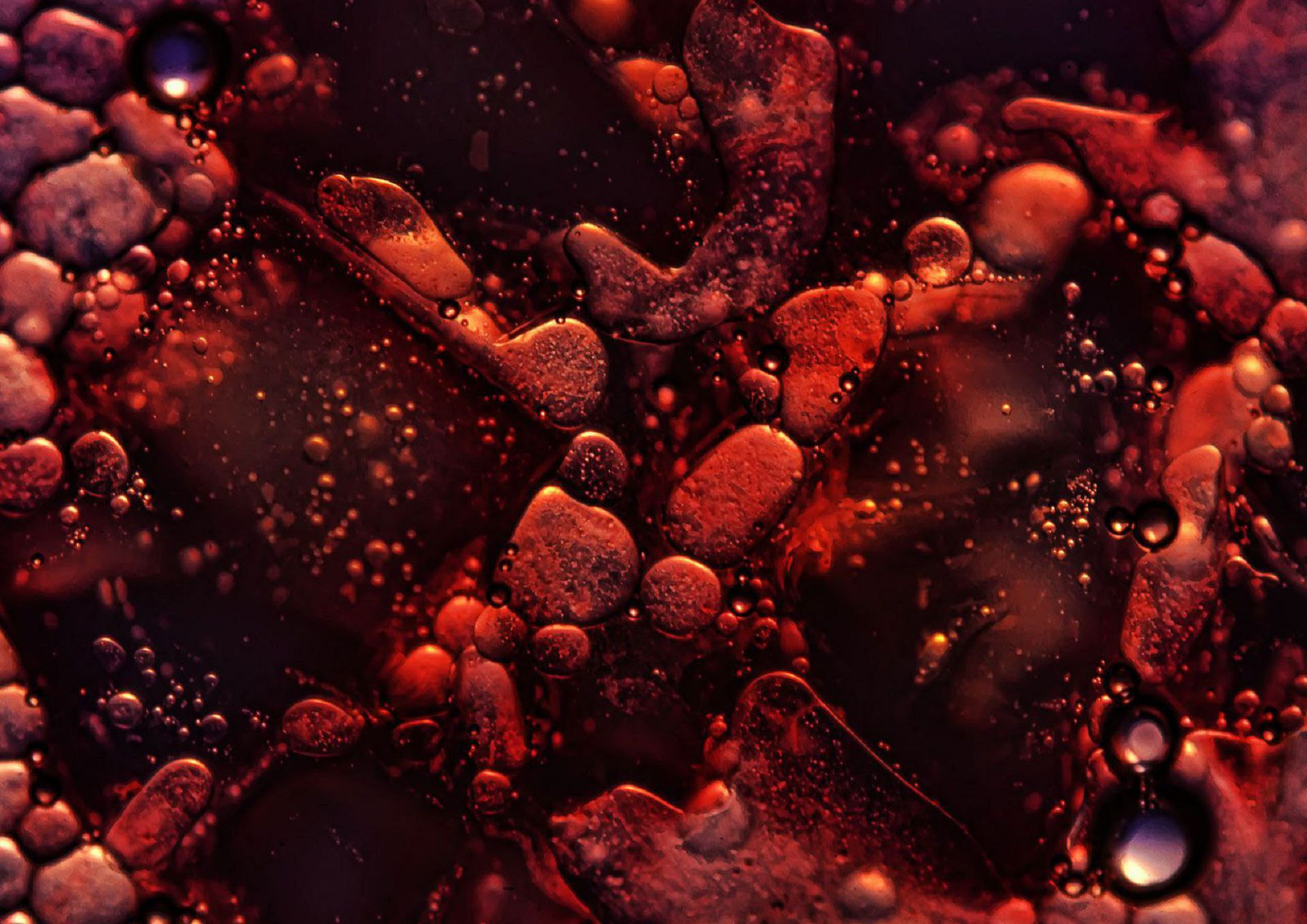 Picture Blood Cells