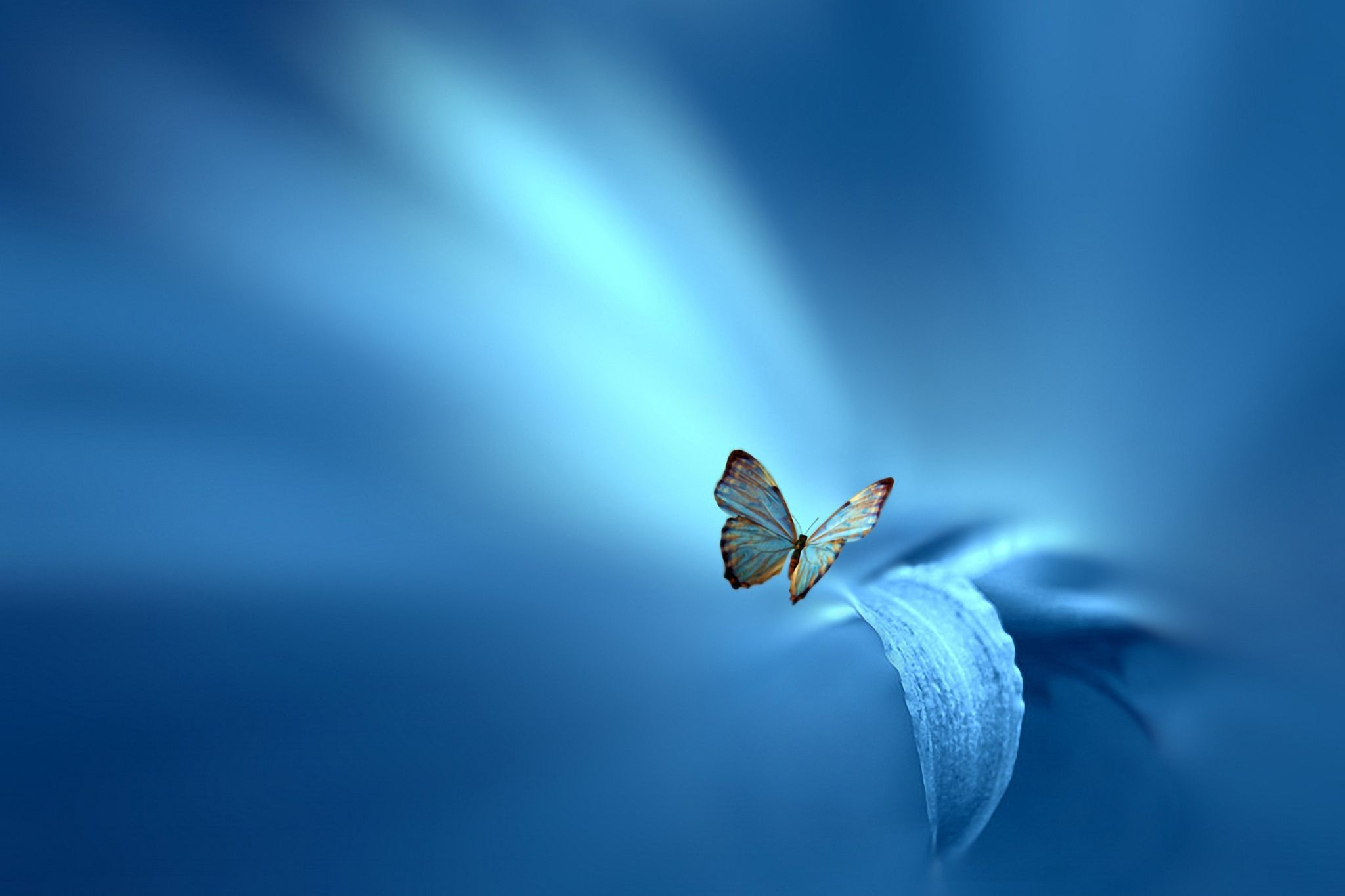Picture Blue Butterfly