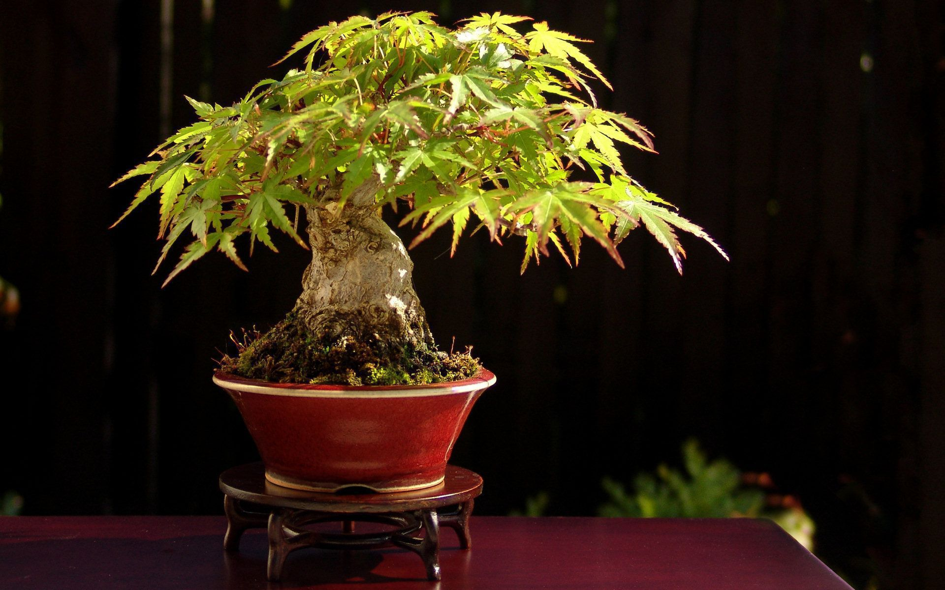 Picture Bonsai