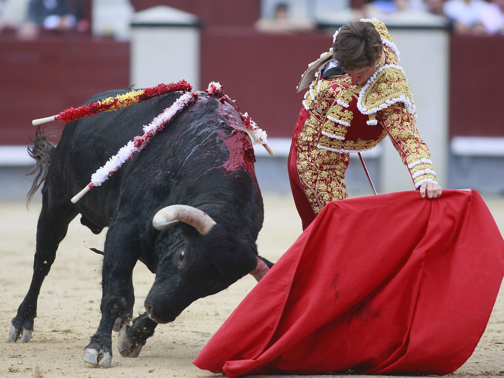 Picture Bull Fighting