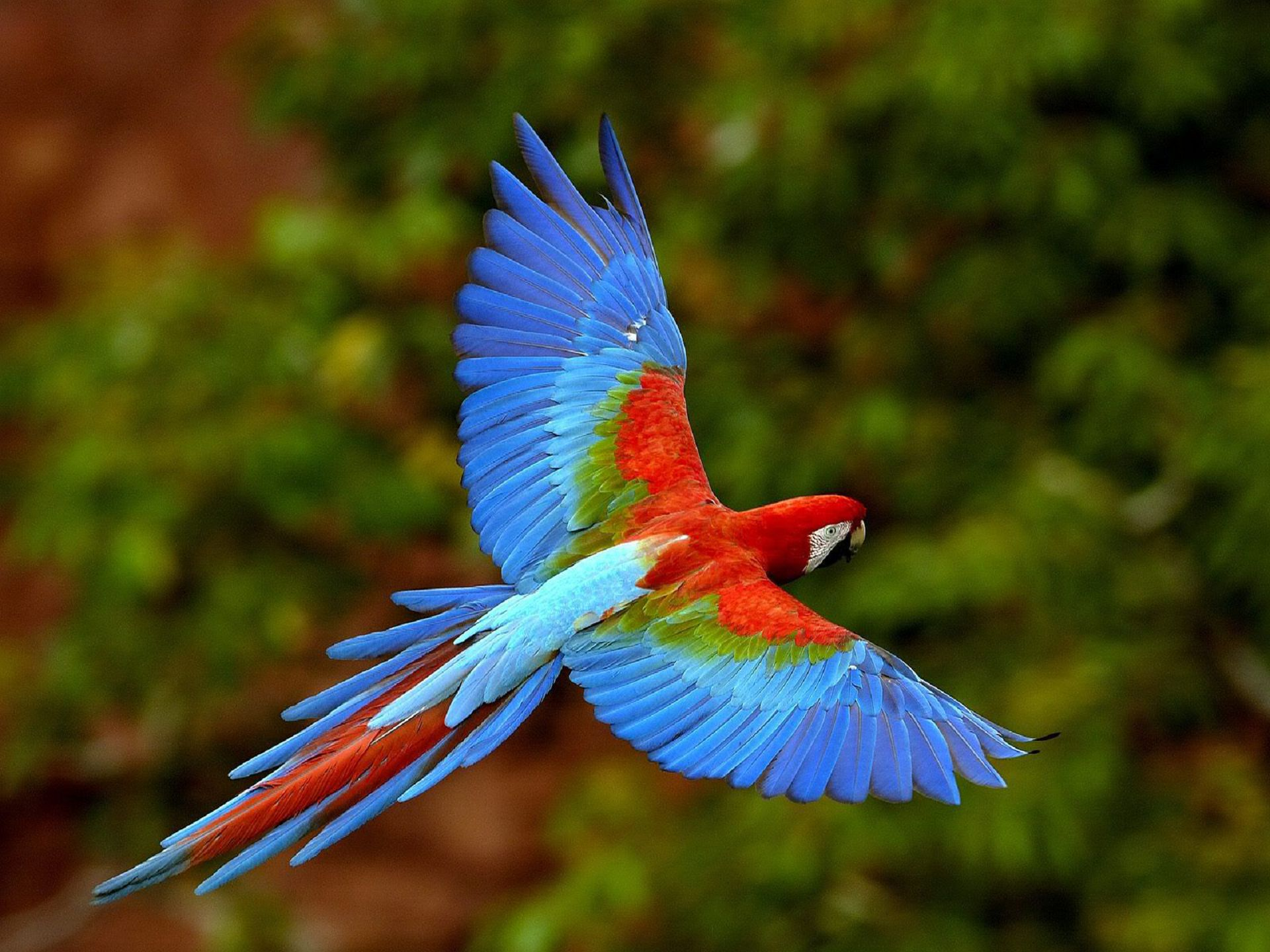 Wide Aves Exoticas
