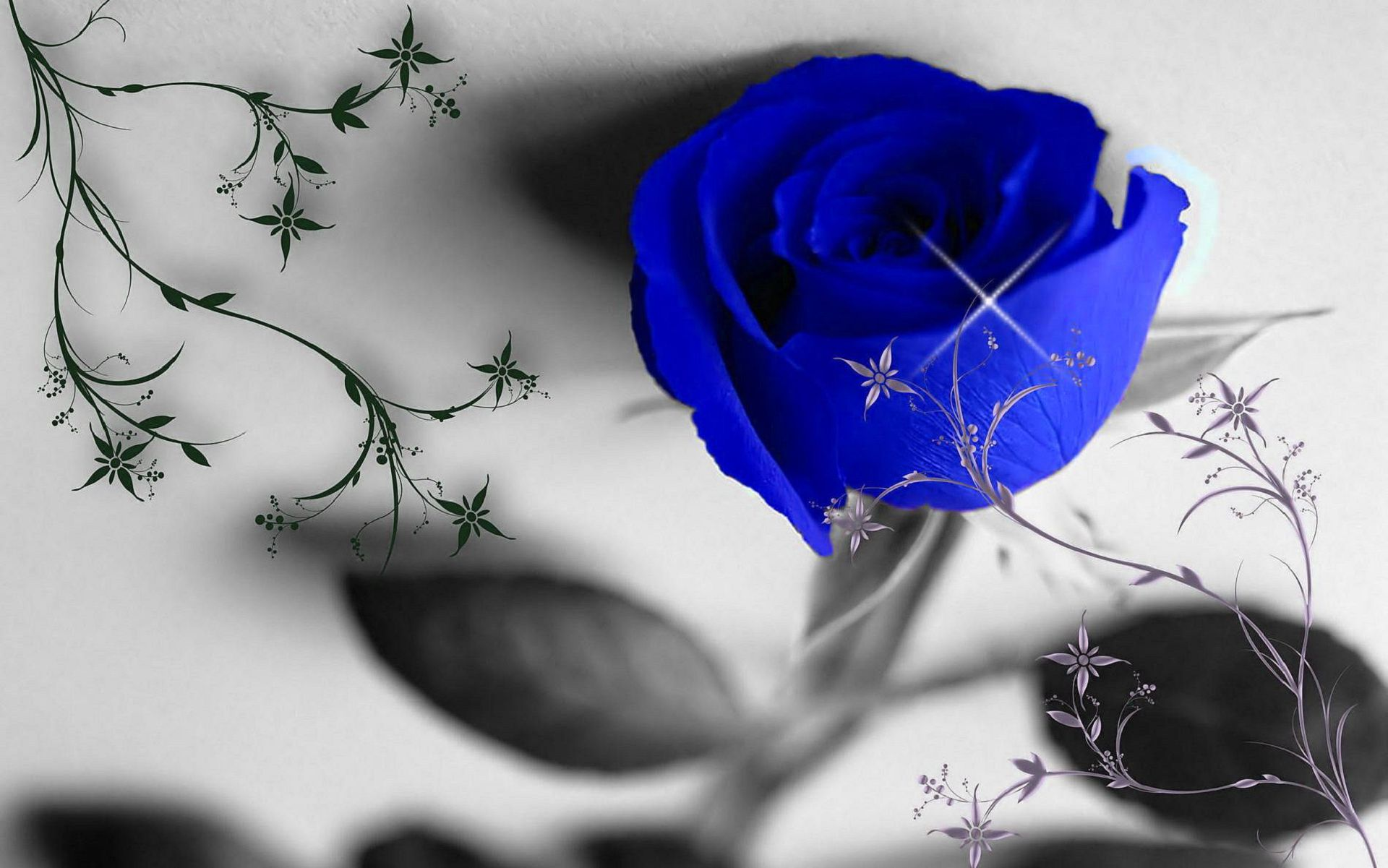 Wide Blue Roses