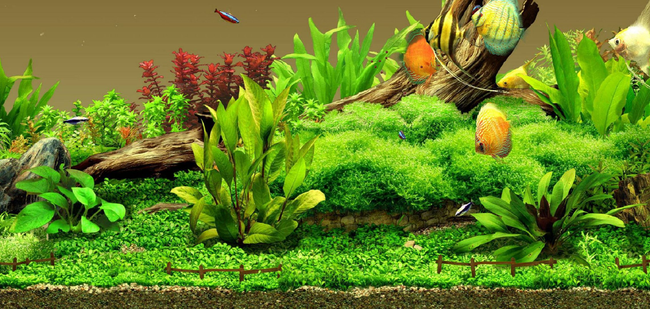 Aquarium High Quality Wallpapers