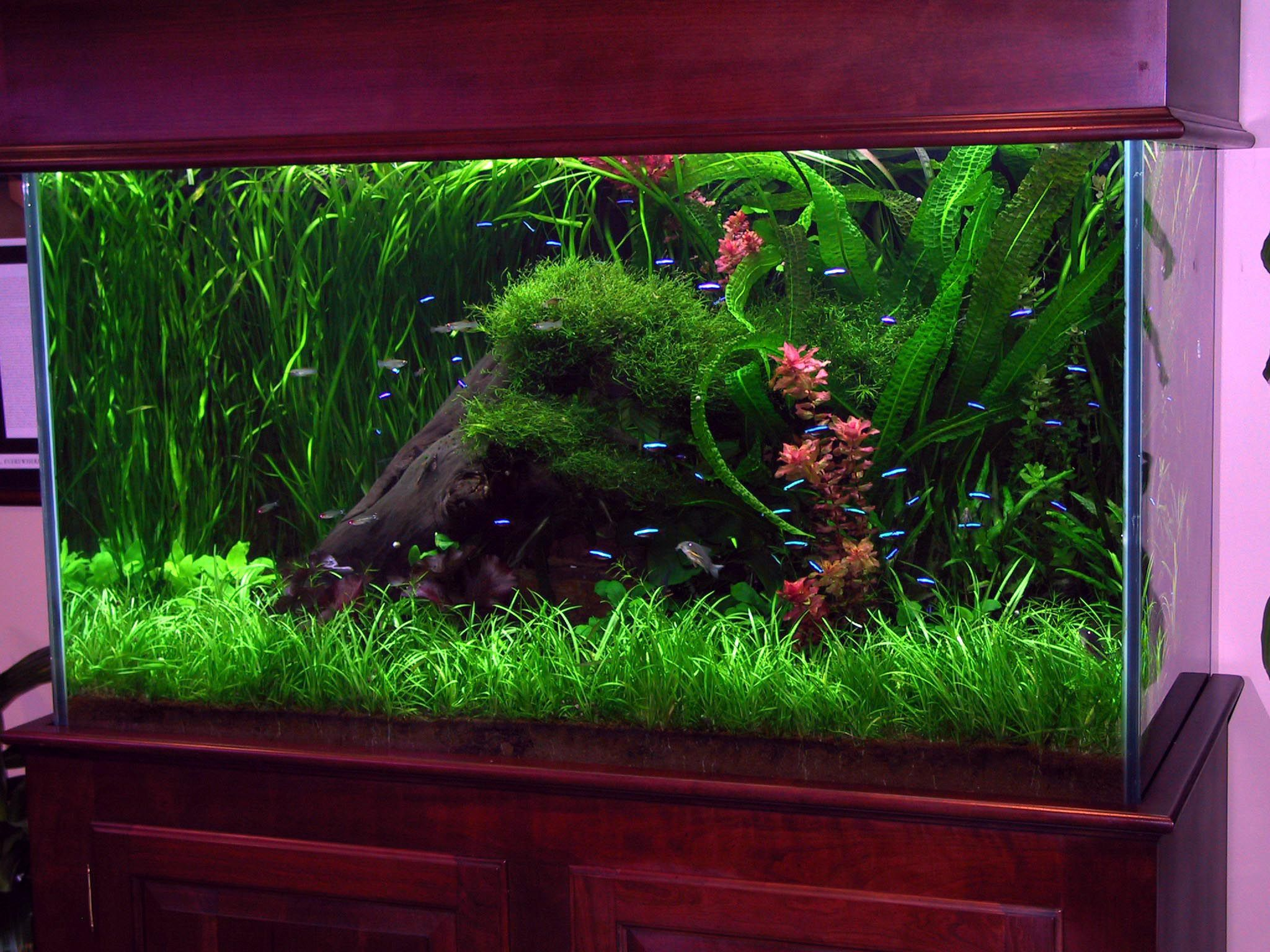 Aquarium Widescreen