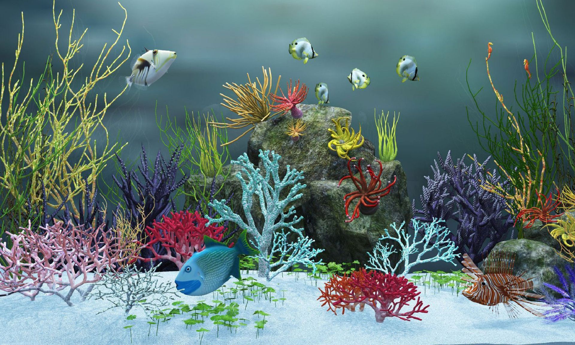 Aquarium In High Resolution