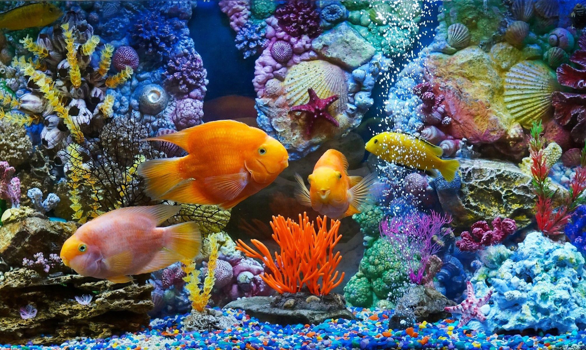 Aquarium Wallpaper Pack