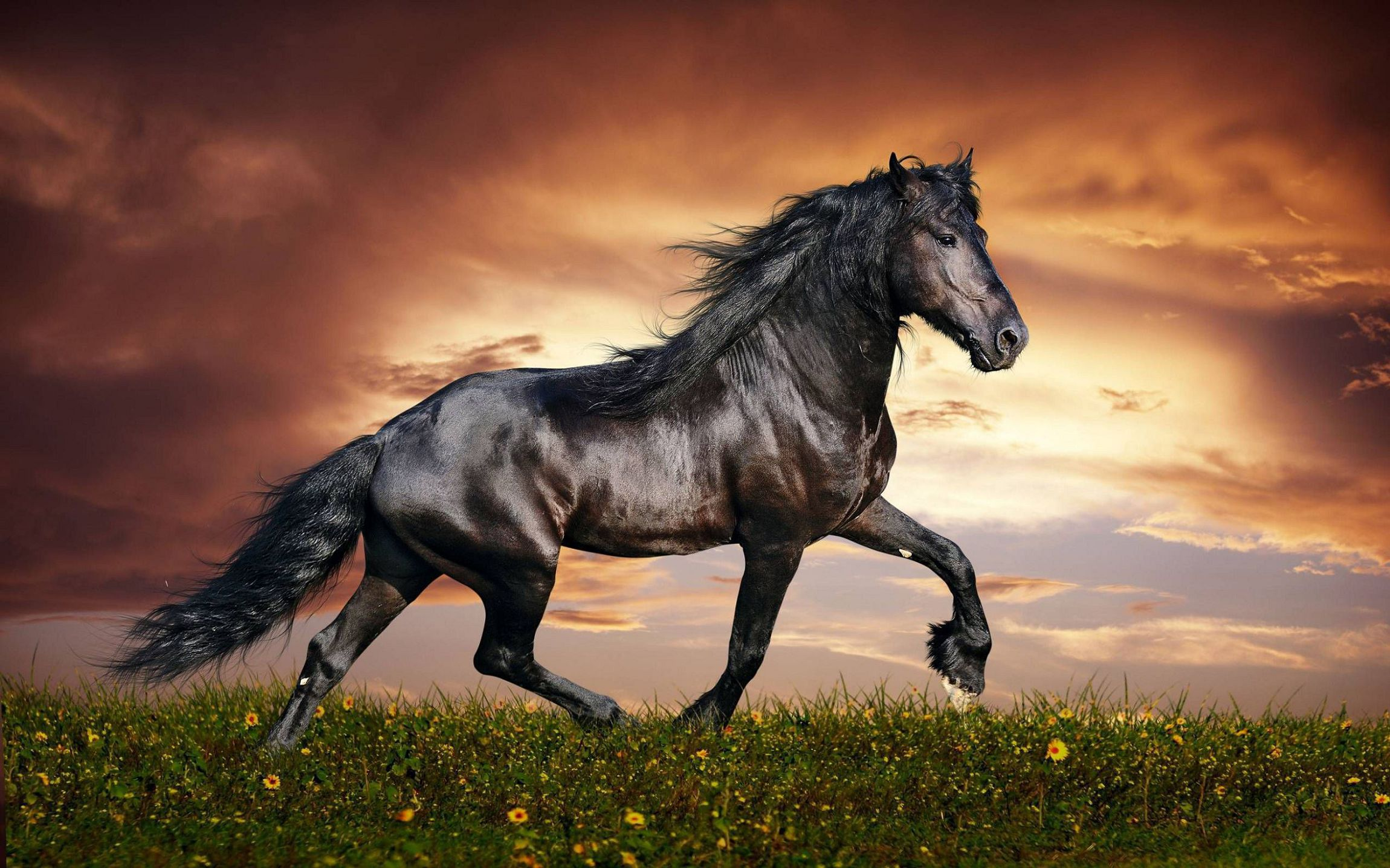 Arabian Horse Background