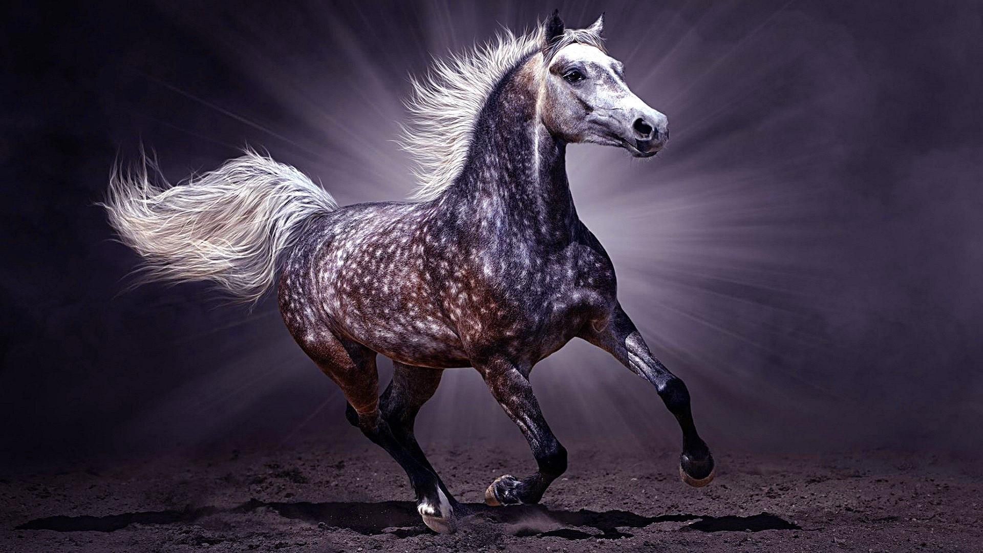 Arabian Horse Wallpapers HD