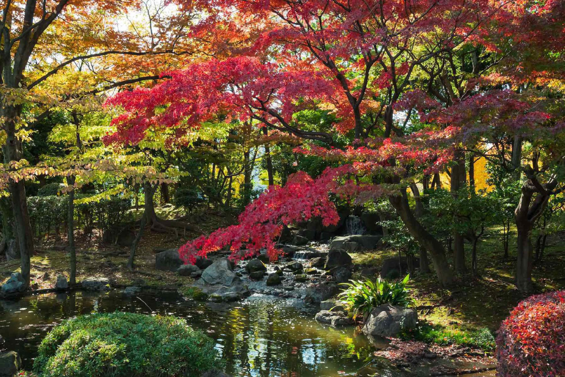 Asian Garden In High Resolution