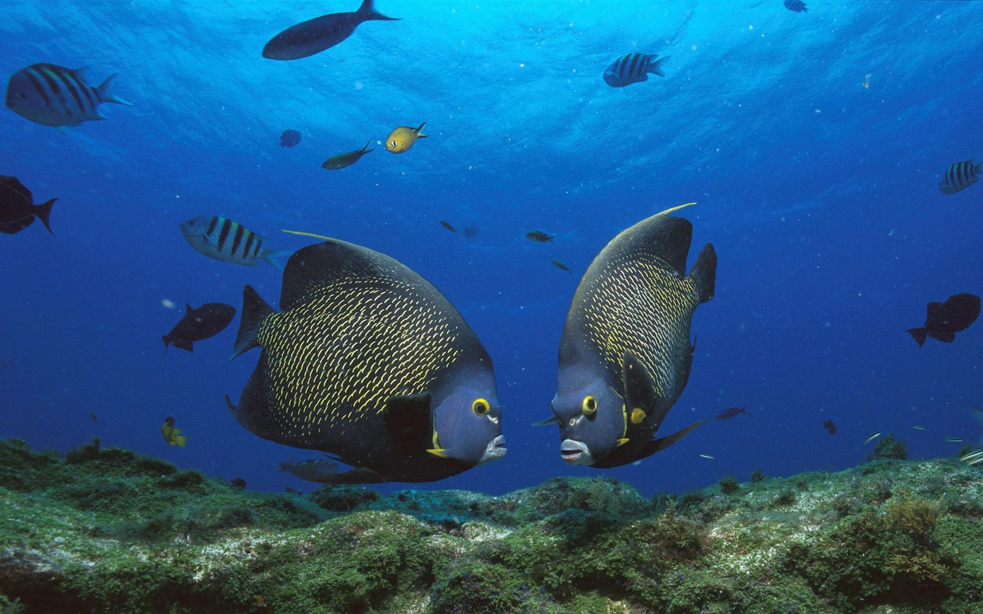 Angel Fish Beautiful