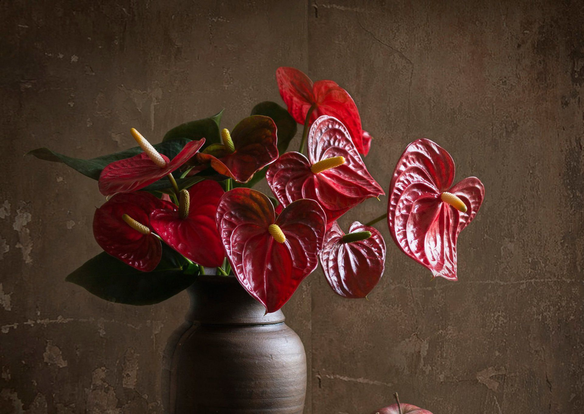 Anthurium For Desktop